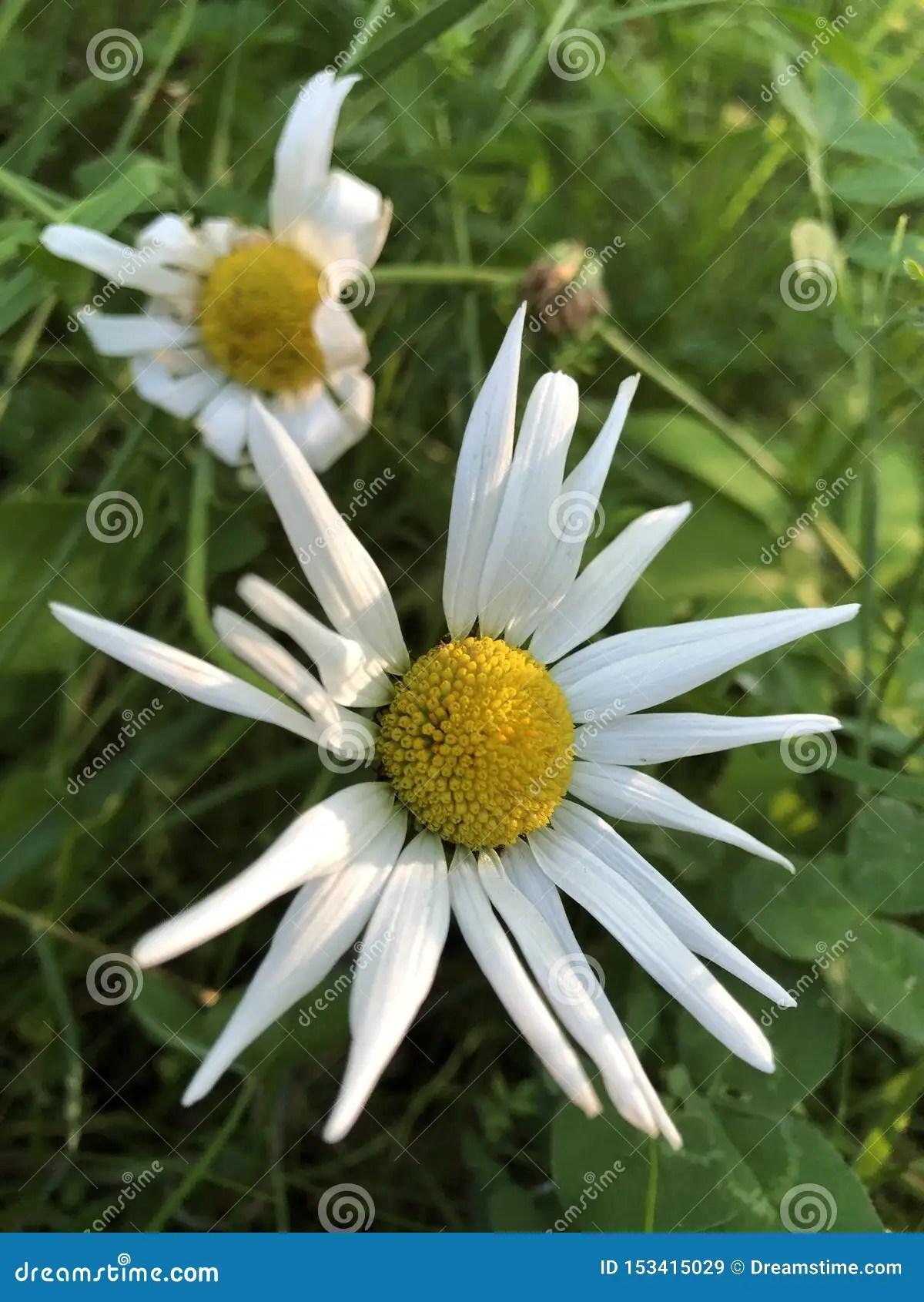Angled Flowers Like Math Equation Stock Image