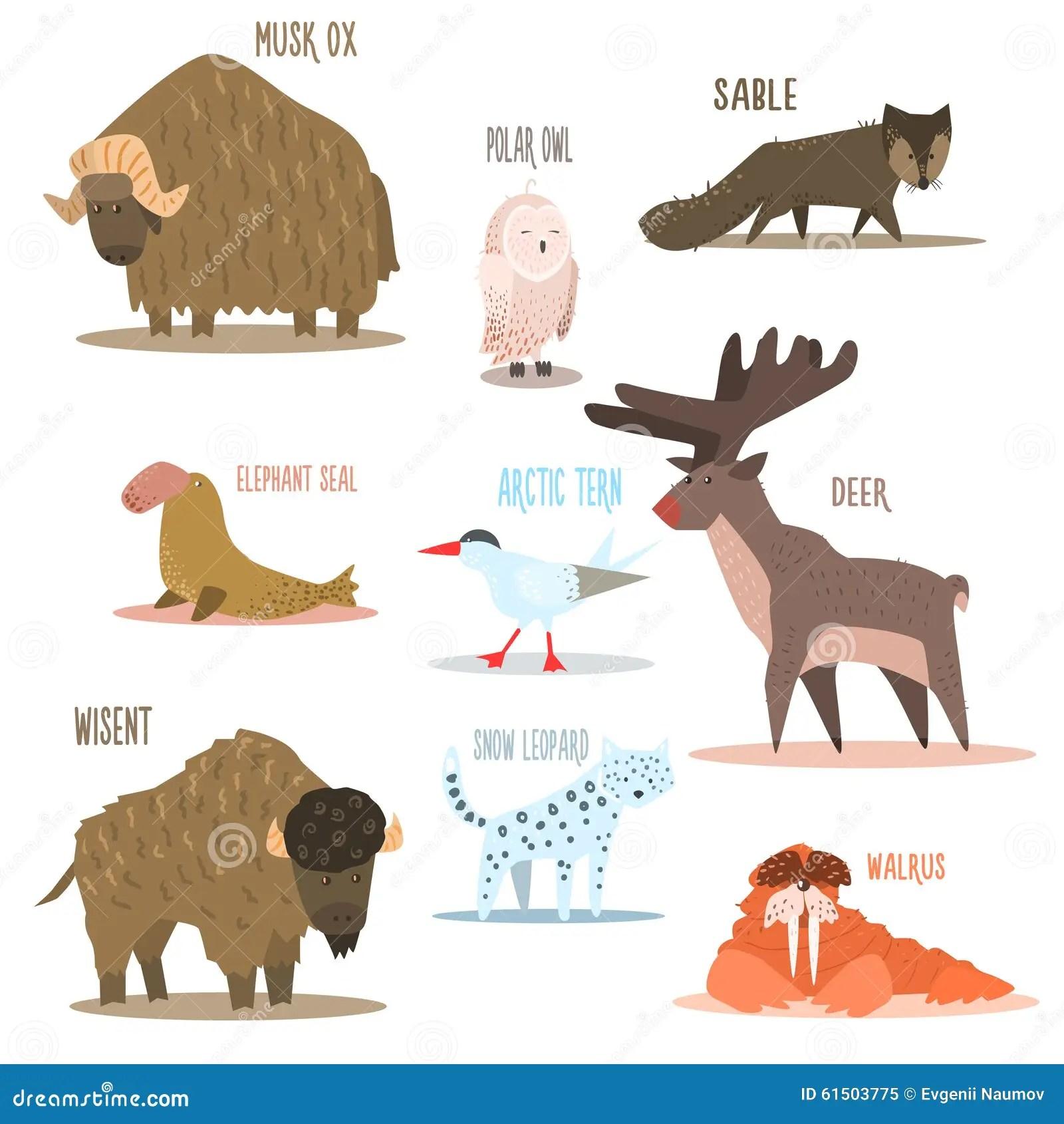 Animais Articos E Antarticos Passaros Vetor Ilustracao Do