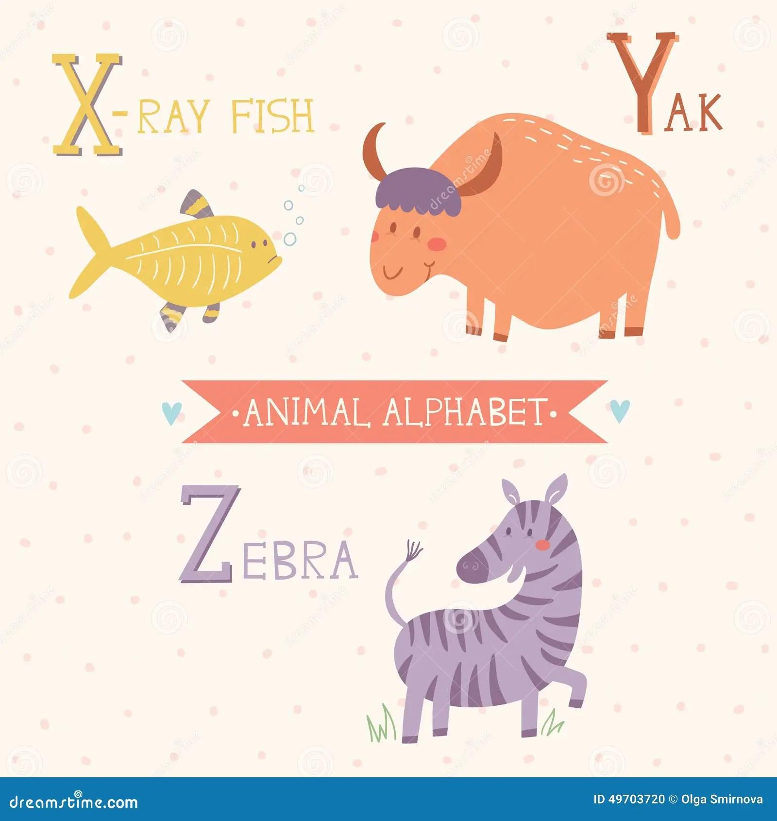 Animal Alphabet X Ray Fish Yak Zebra Part 7 Stock
