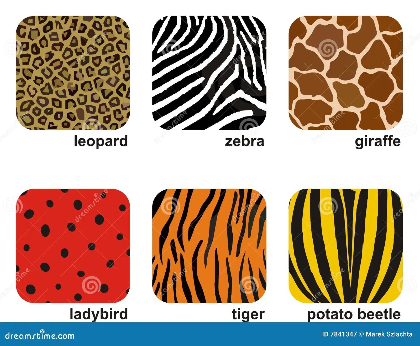 Animal Prints Stock Vector Image Of Animal Backgrounds