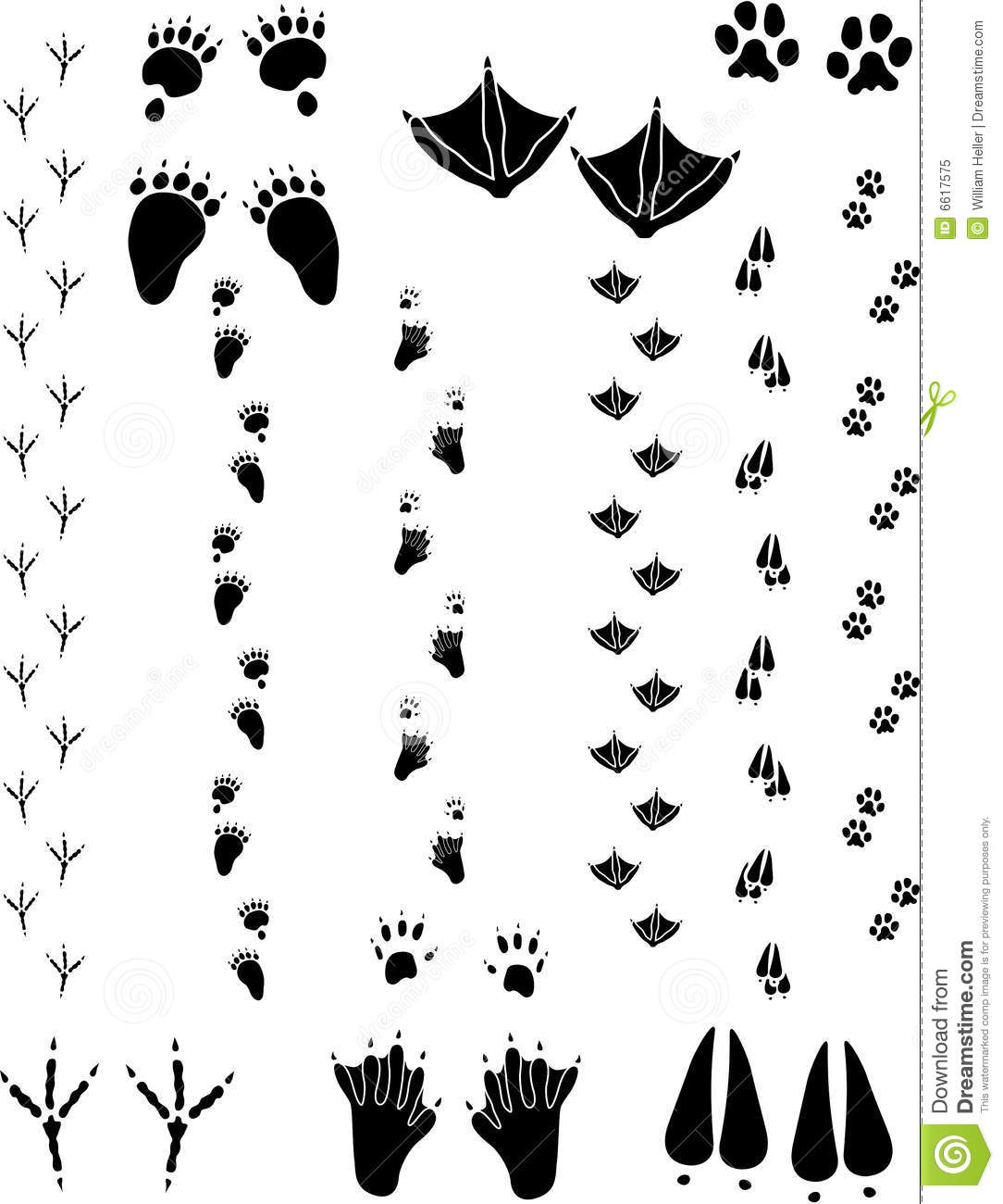Animal Tracks 02 Stock Vector Illustration Of Canadensis
