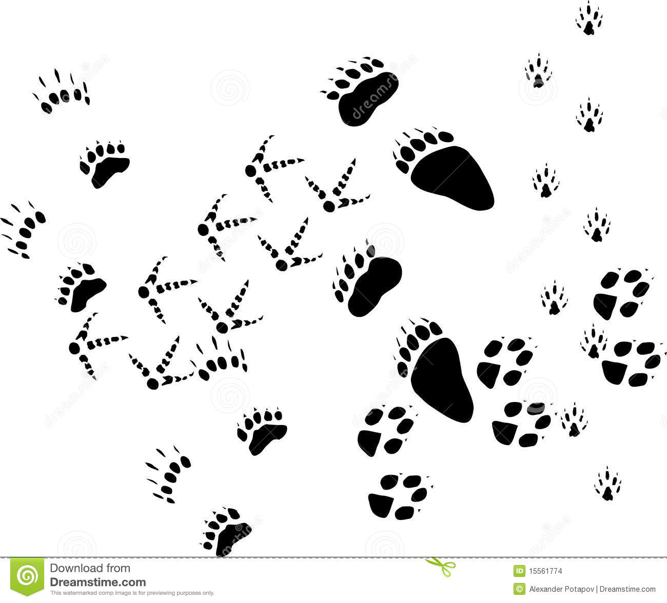 Animal Tracks On White Stock Vector Illustration Of