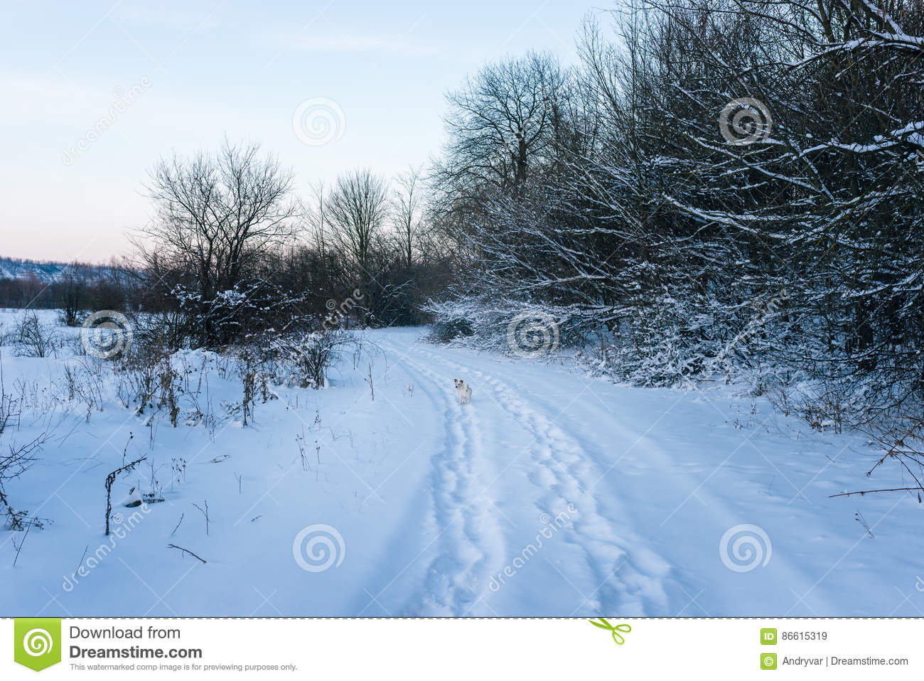 Animal Tracks In The Winter Snow Stock Image