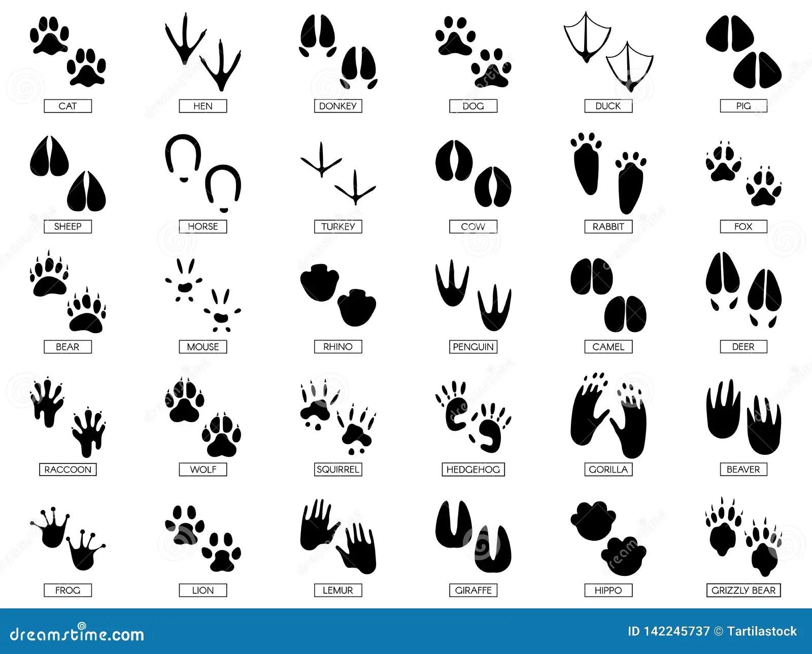 African Animal Tracks Stock Image