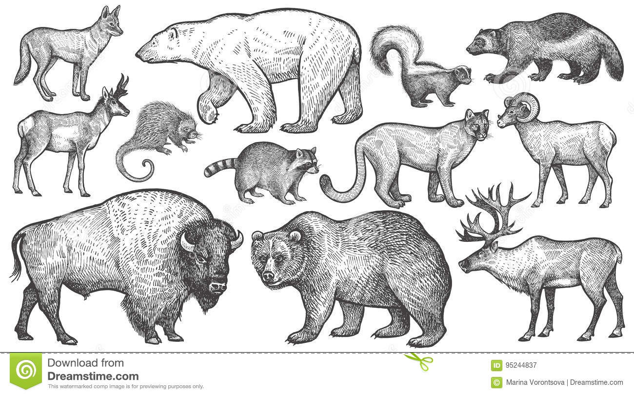 Animals Of North America Big Set Stock Vector