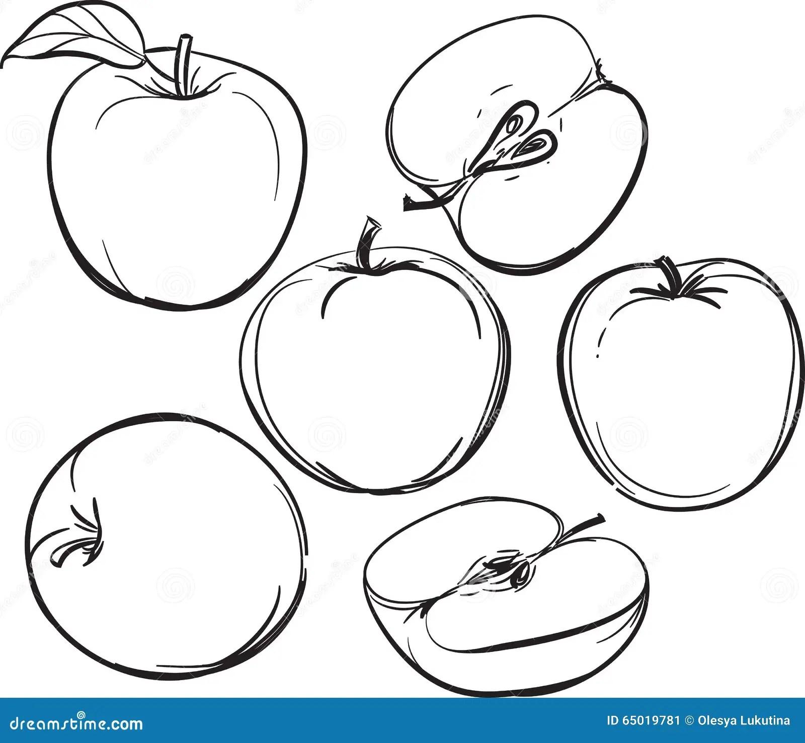 Apple Lijntekening Van Appelen Op Een Witte Achtergrond