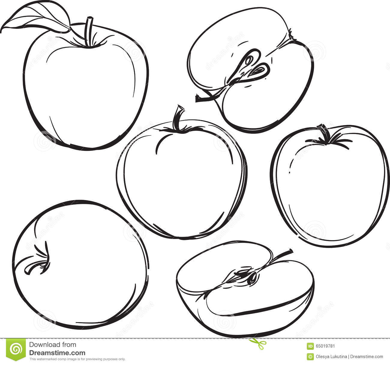 Apple Line Drawing Of Apples On A White Background One