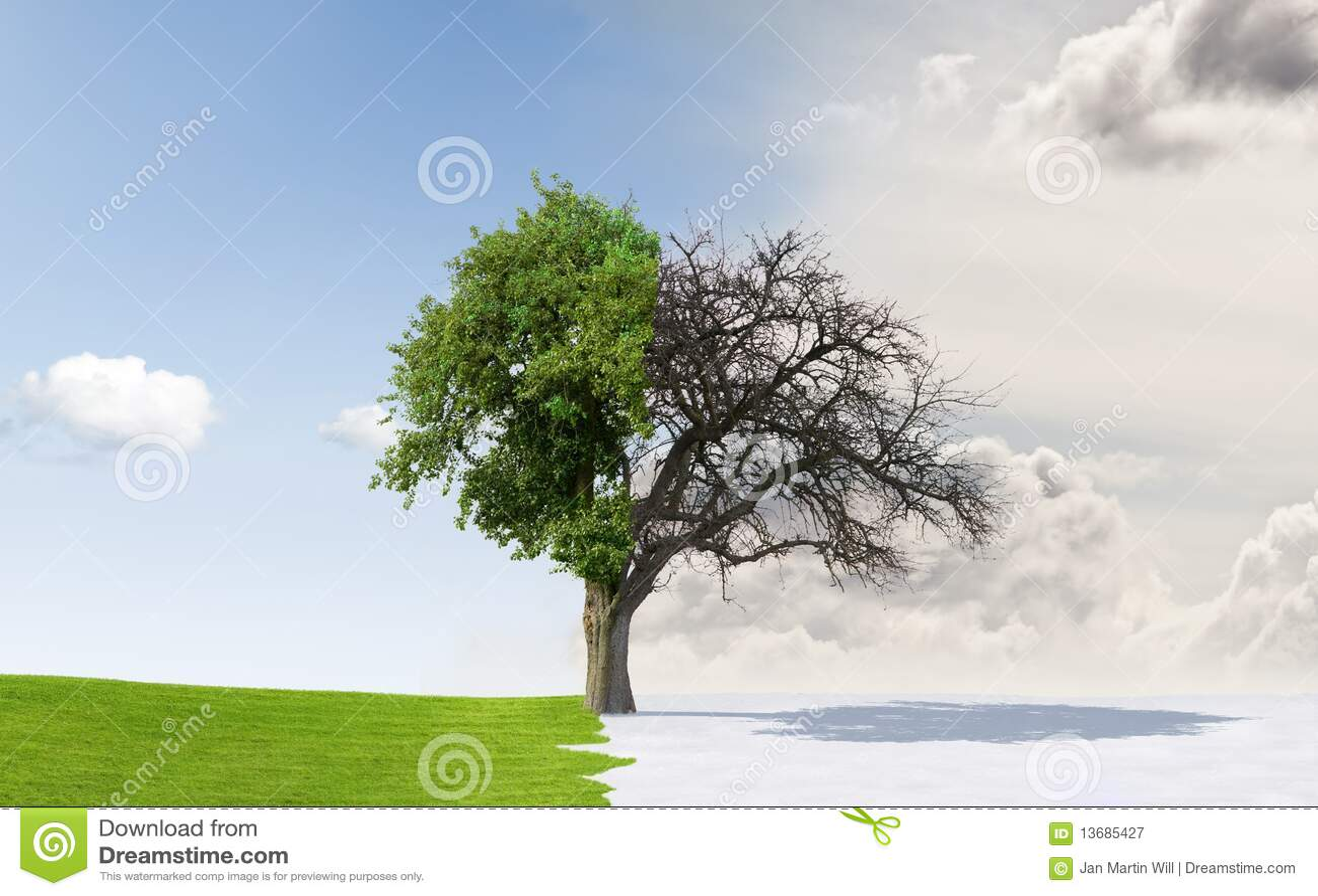 Apple Tree In Changing Seasons Stock Image