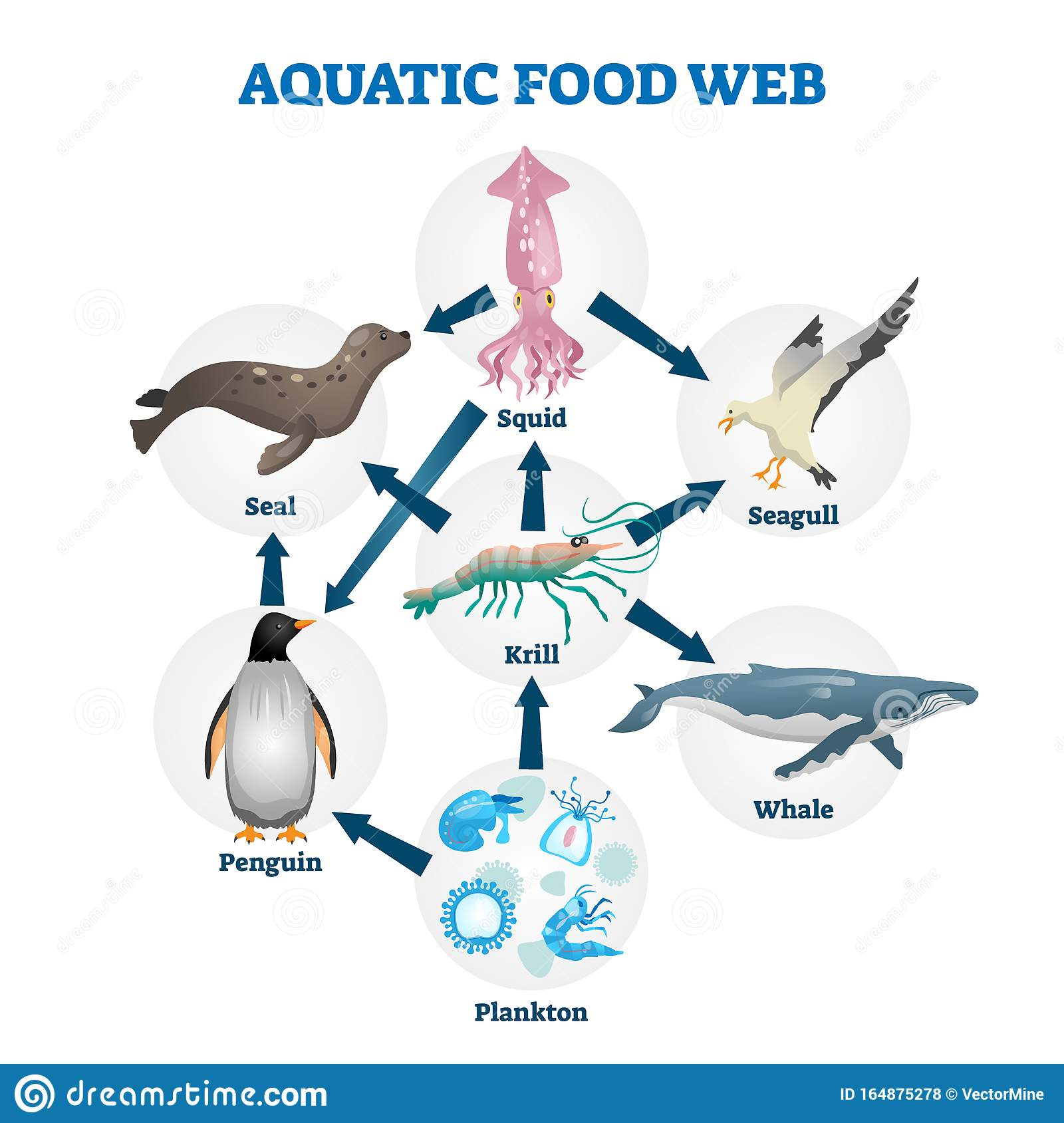 Aquatic Food Web Vector Illustration Labeled Educational