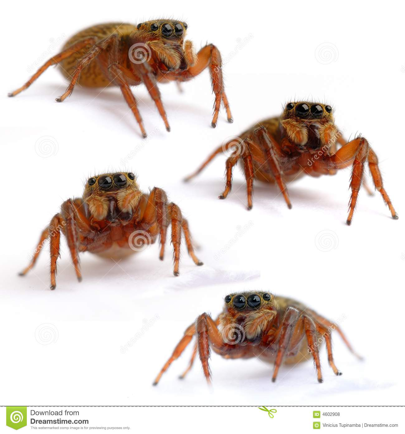 Arachnid Stock Photo Image Of Spider Animal Insect