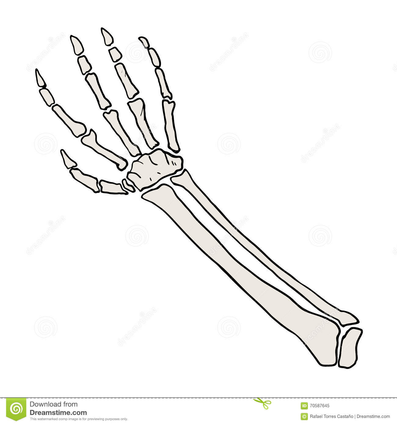 Humerus Arm Anatomy