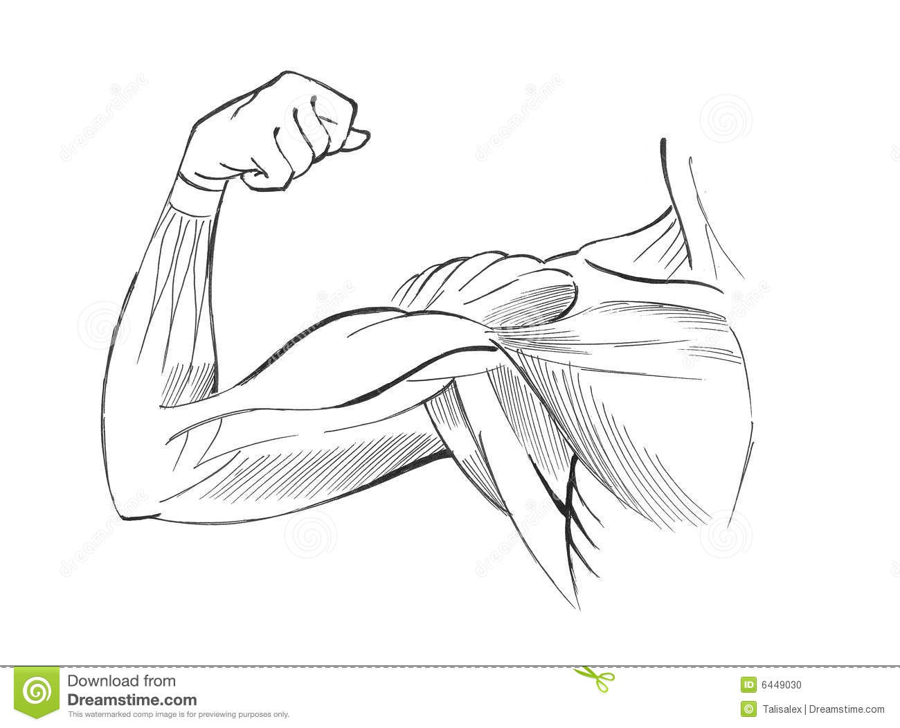 Arm Muscles Stock Illustration Image Of Hand Male Figure