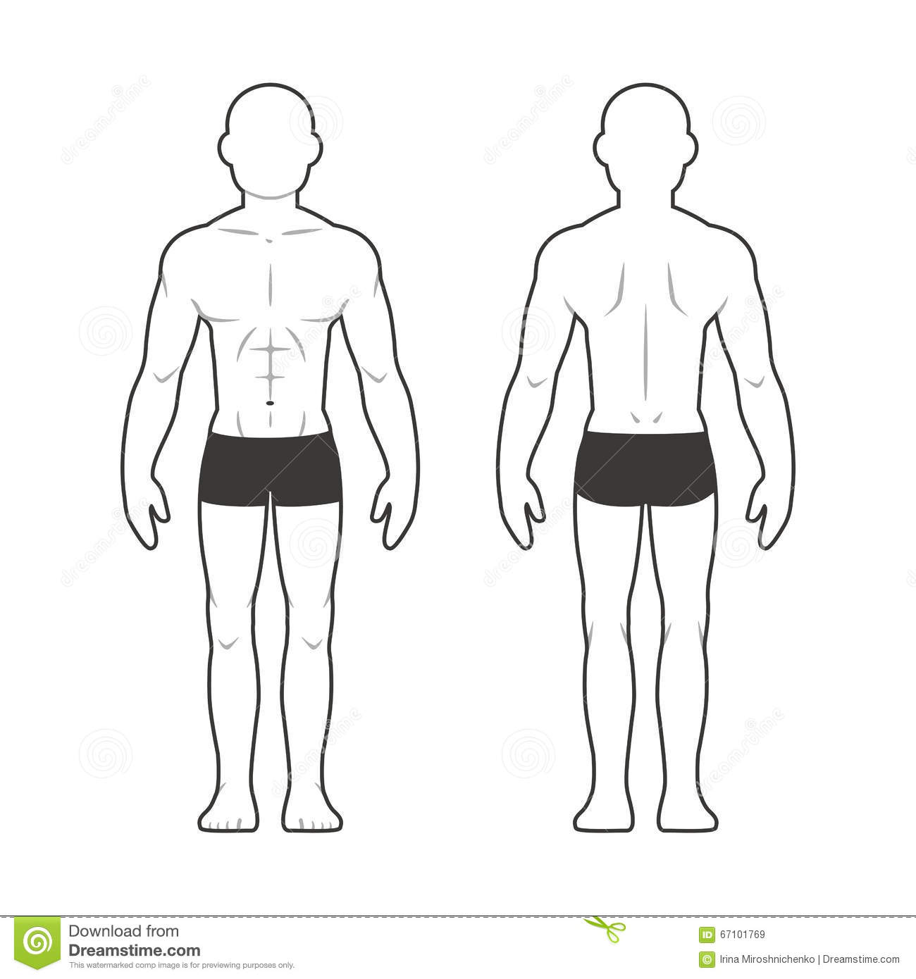 Athletic Male Body Chart Stock Vector Illustration Of