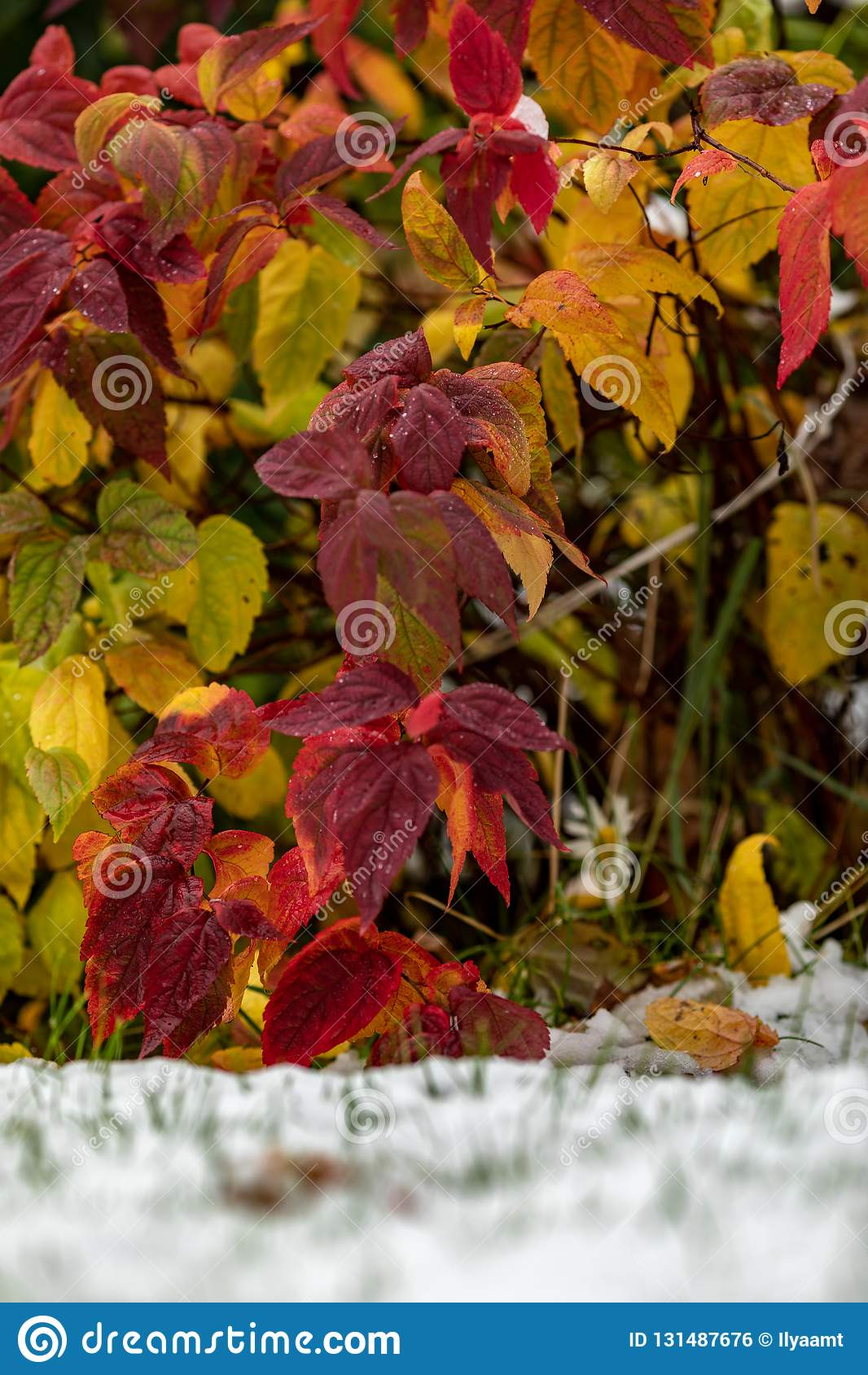 Autumn Bright Red Orange Yellow And Green Leaves Are