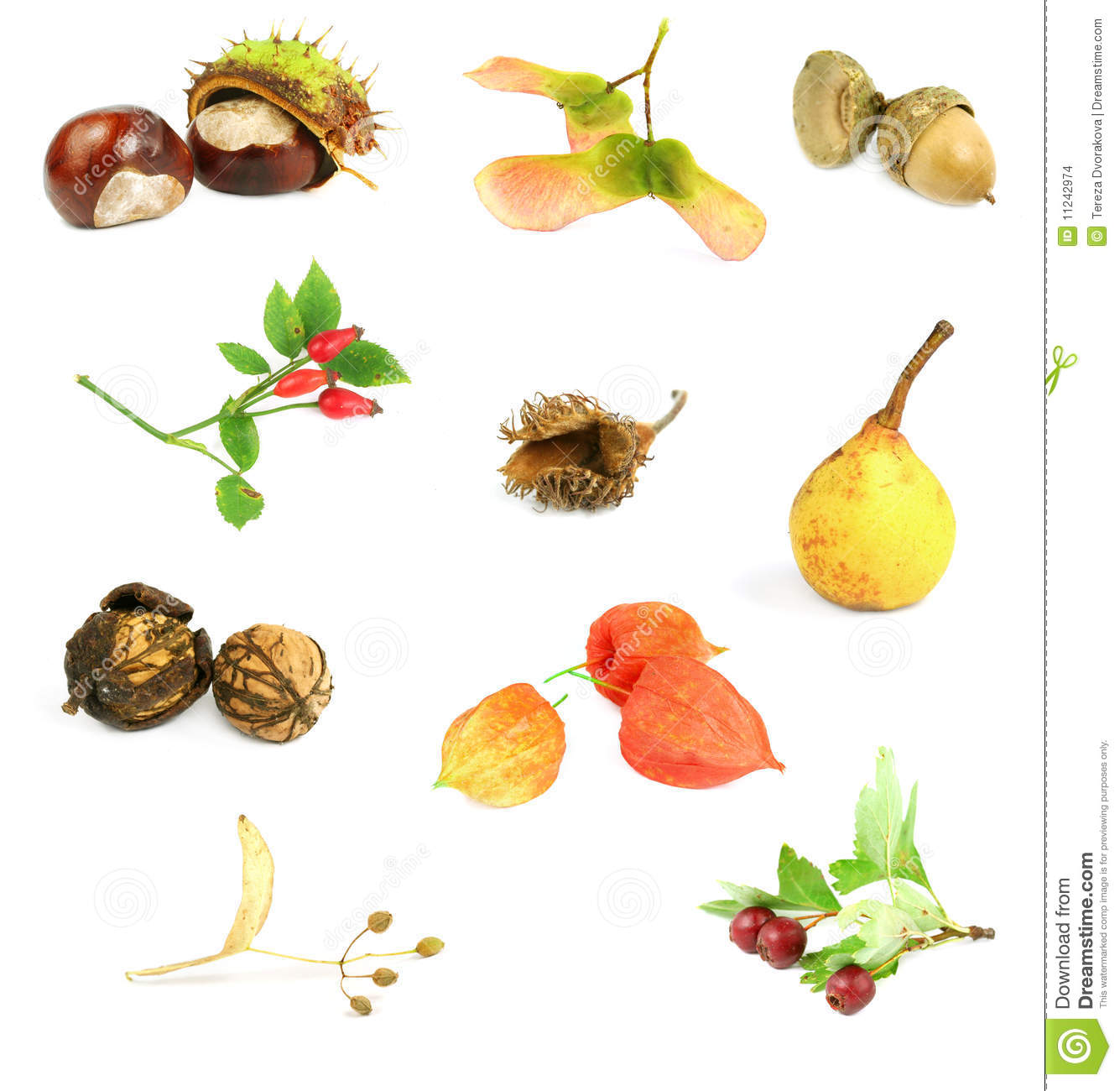 Autumn Nuts Seeds And Fruits Stock Photo
