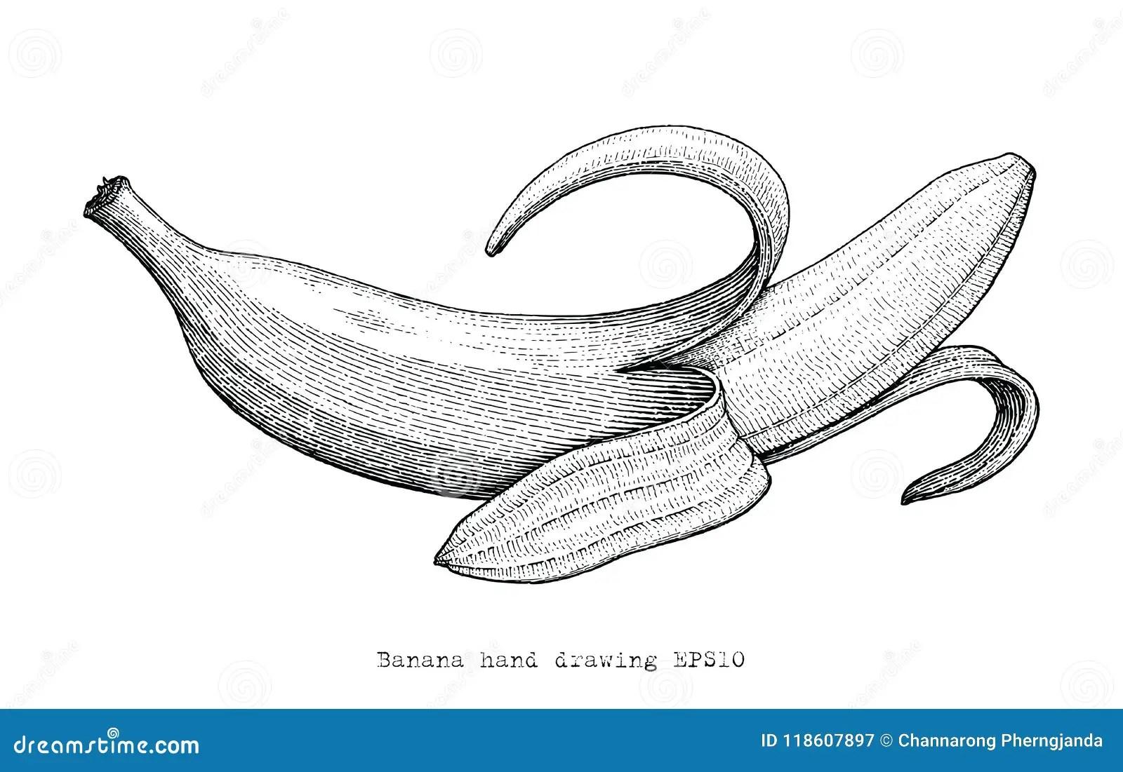 Banana Hand Drawing Engraving Style Banana Black And White
