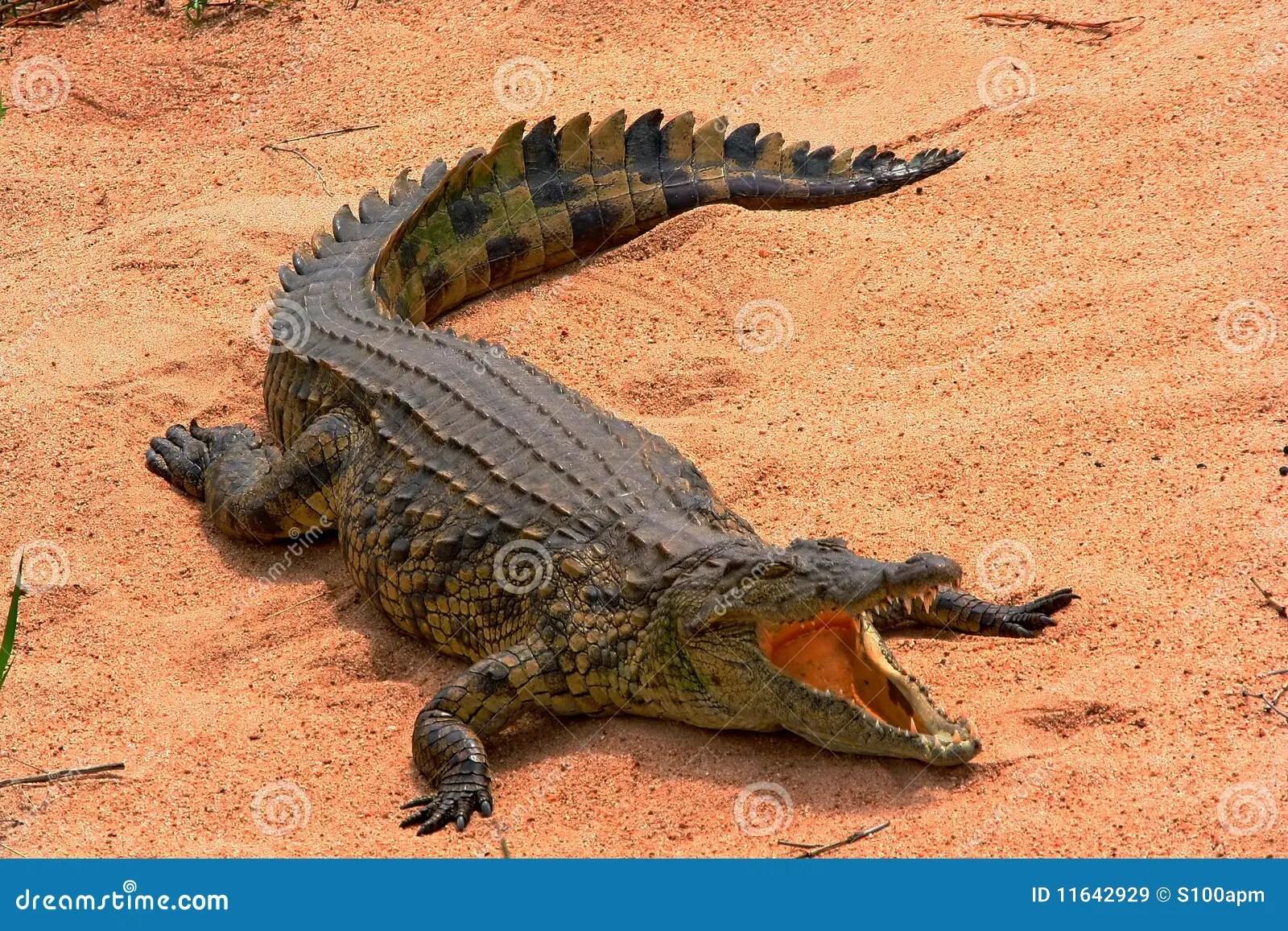 Reptiles For Ks1 And Ks2 Children
