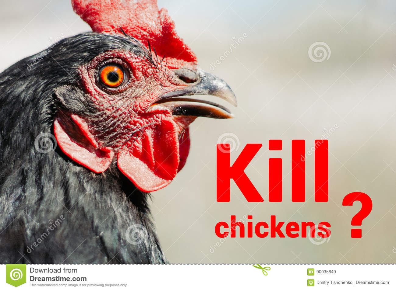 Beautiful Chicken Close Up Concept Of Poultry The Threat Of Avian Influenza