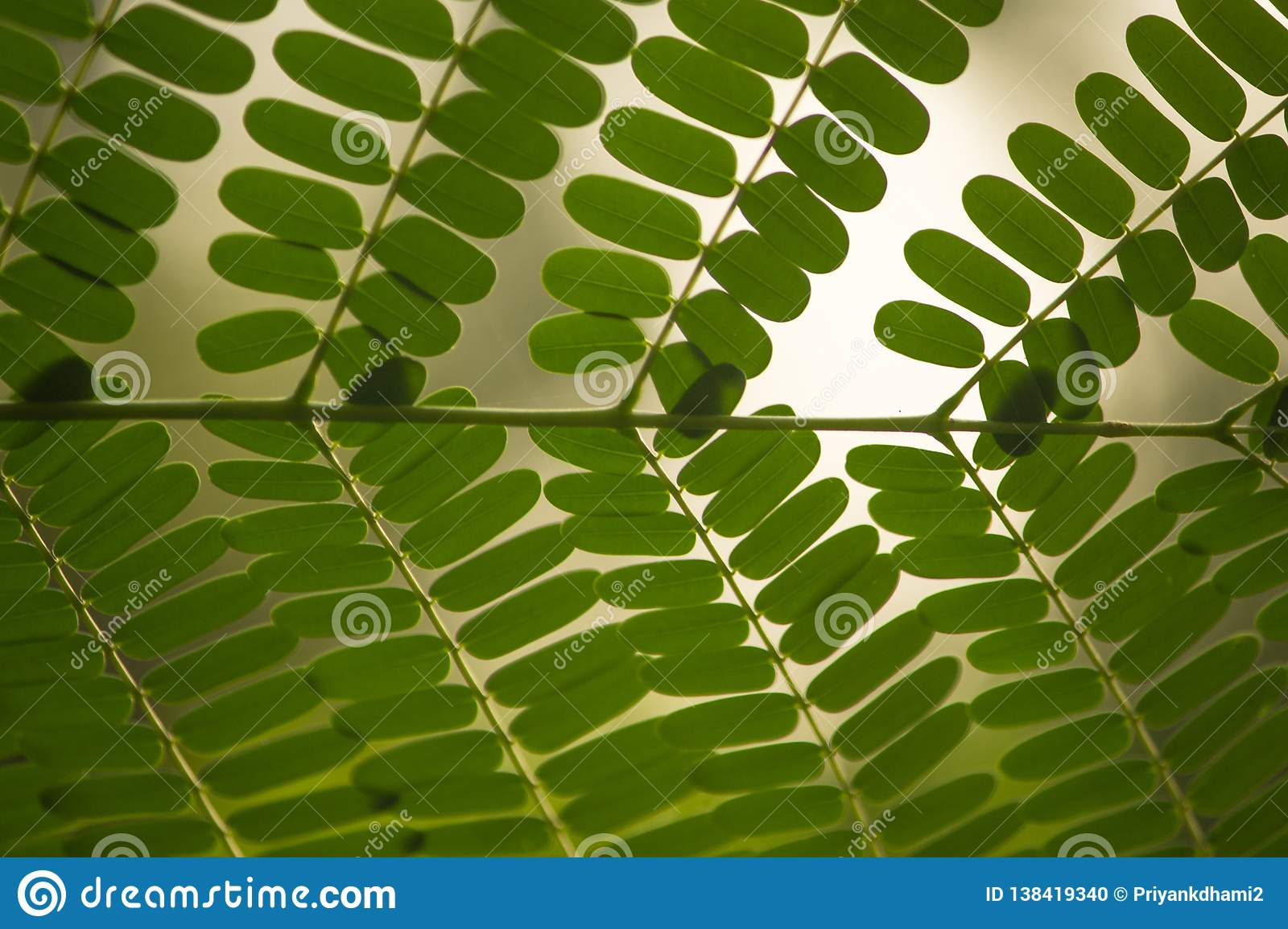 A Beautiful Green Color Leaf Pattern With Green Background