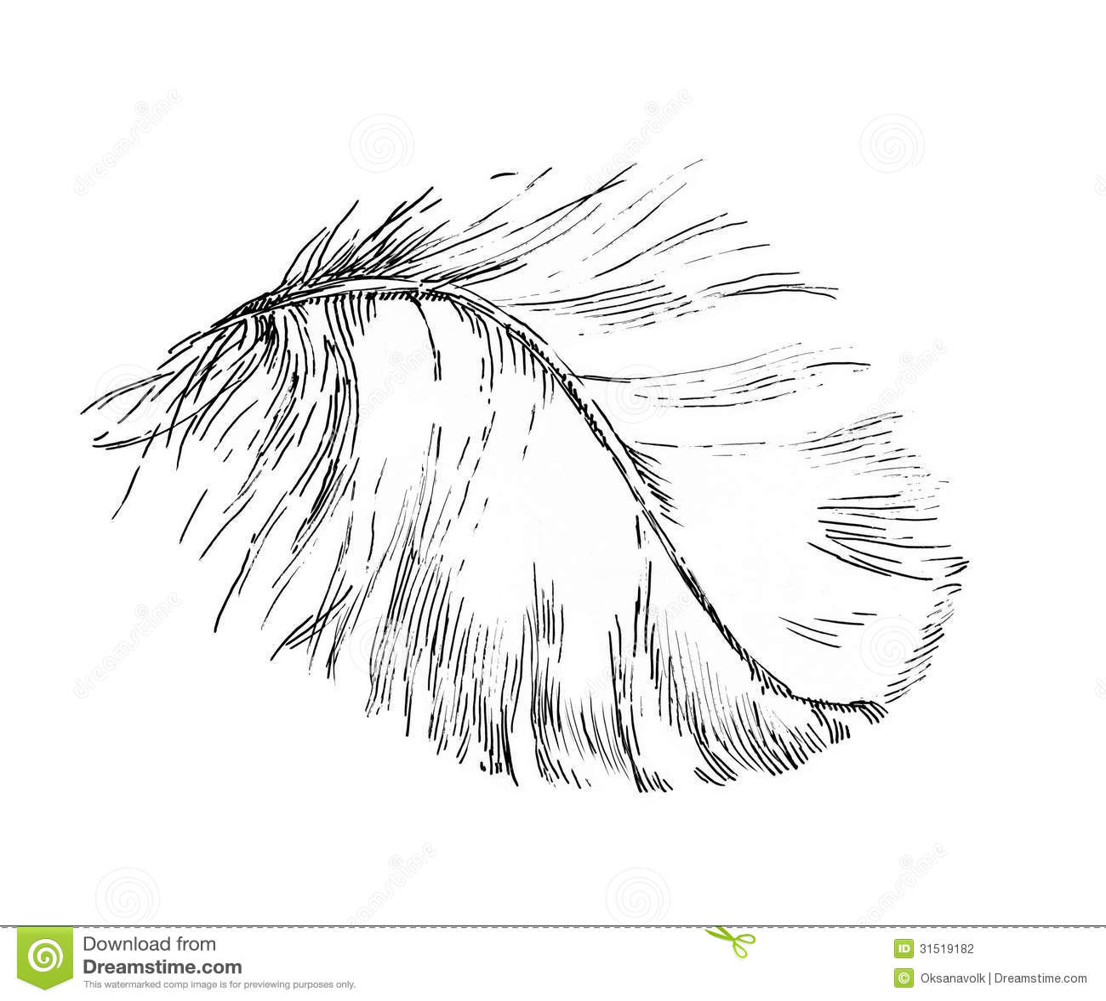 Beautiful Light White Feather Illustration Sketch Stock