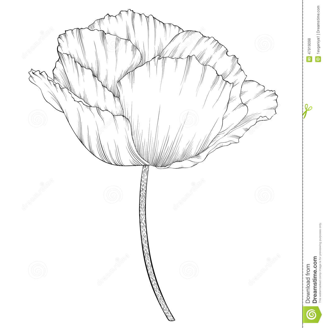 Beautiful Monochrome Black And White Poppy In A Hand Drawn