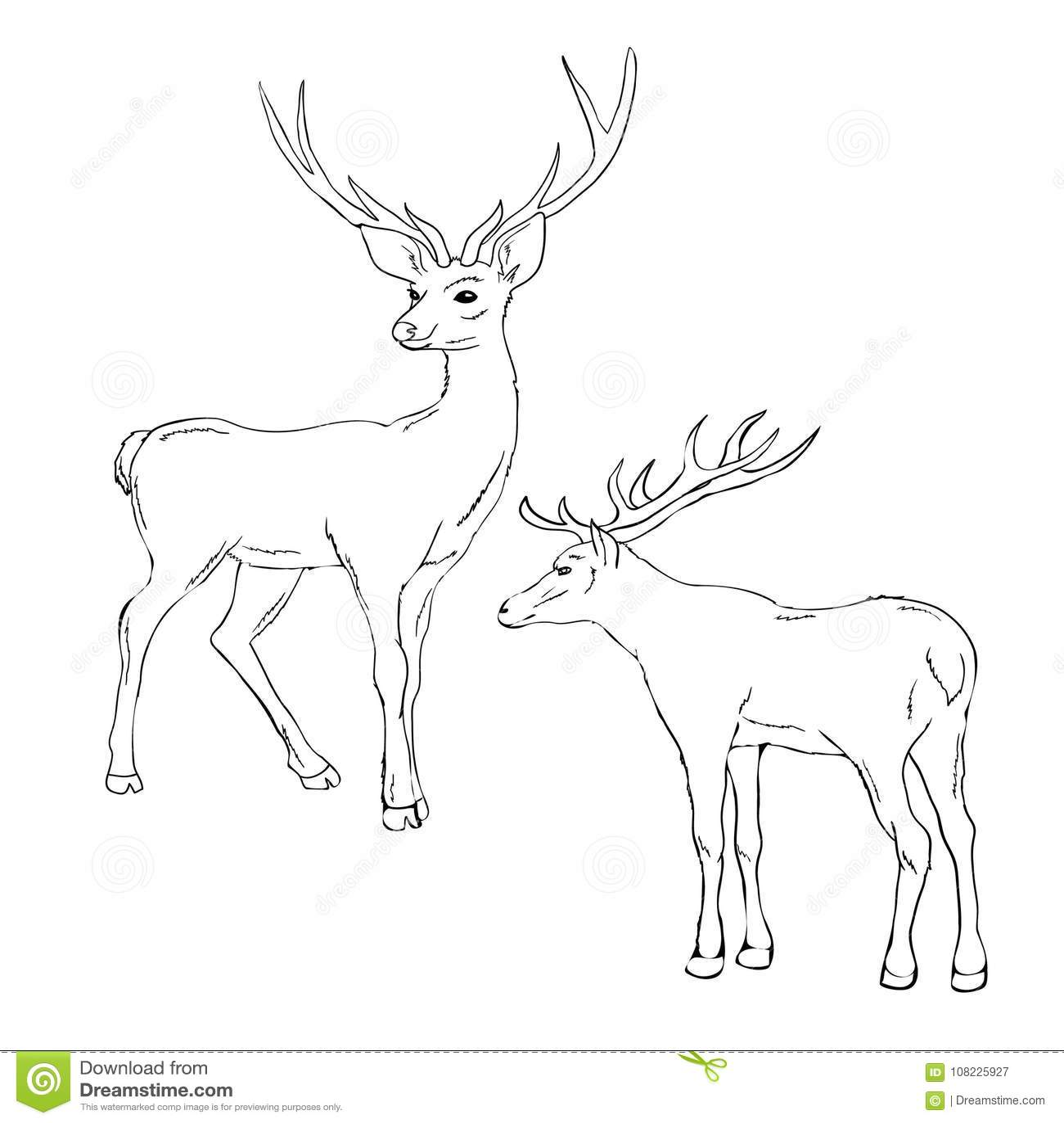 Ruminant Cartoons Illustrations Amp Vector Stock Images
