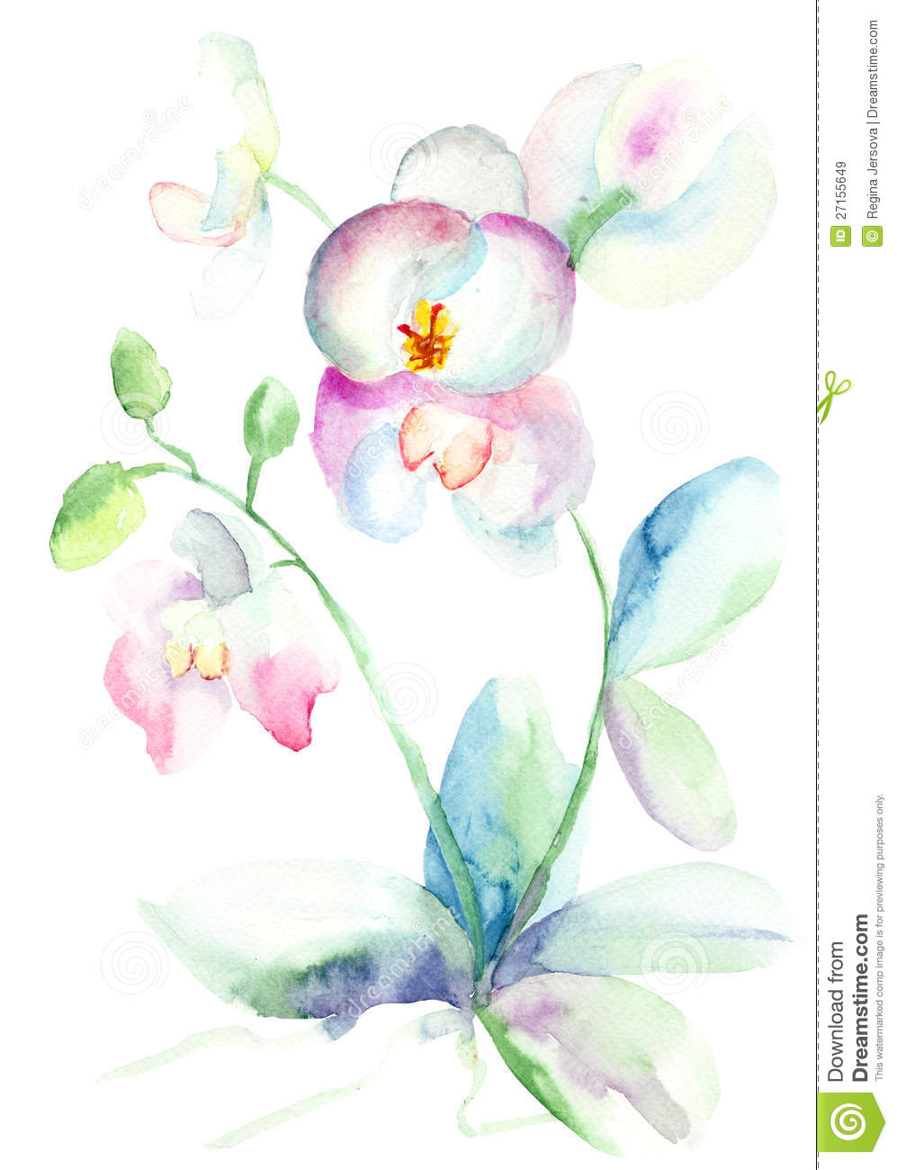 Beautiful Orchid Watercolor Illustration Stock