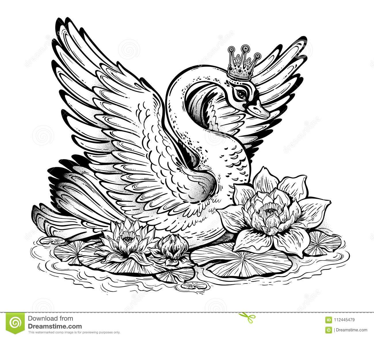 Beautiful Swan Bird In Pond Of Lily Water Flowers Stock