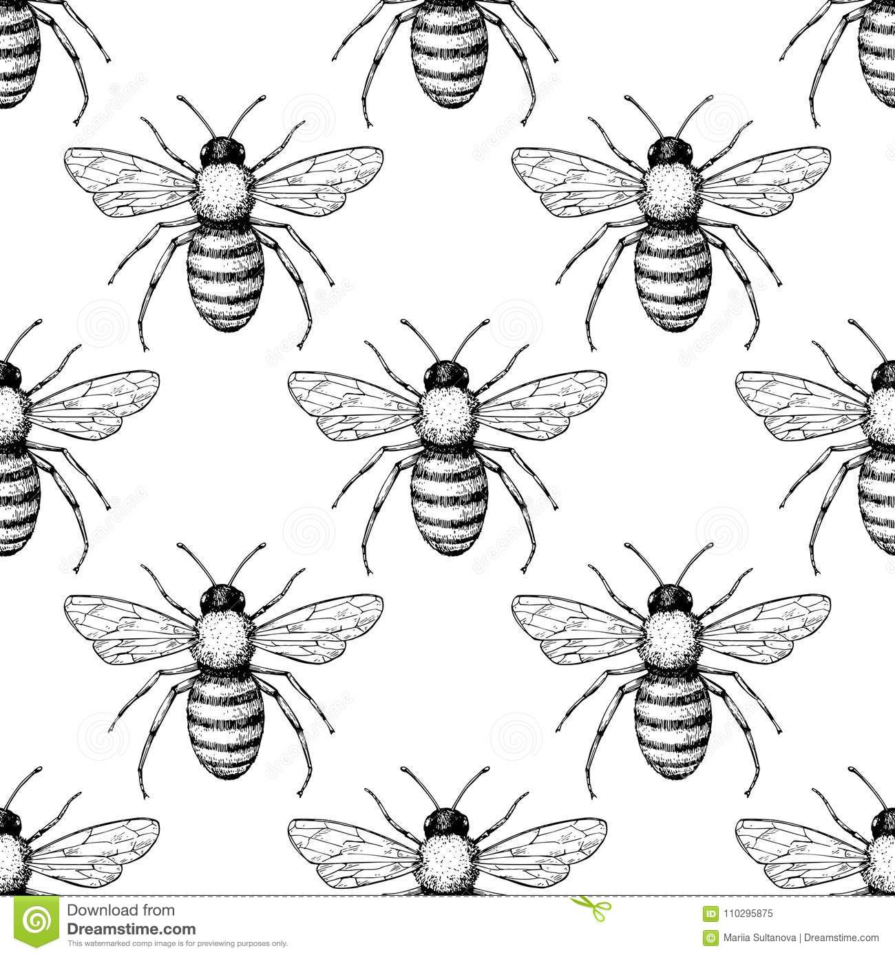 Bee Vector Seamless Pattern Hand Drawn Insect Background