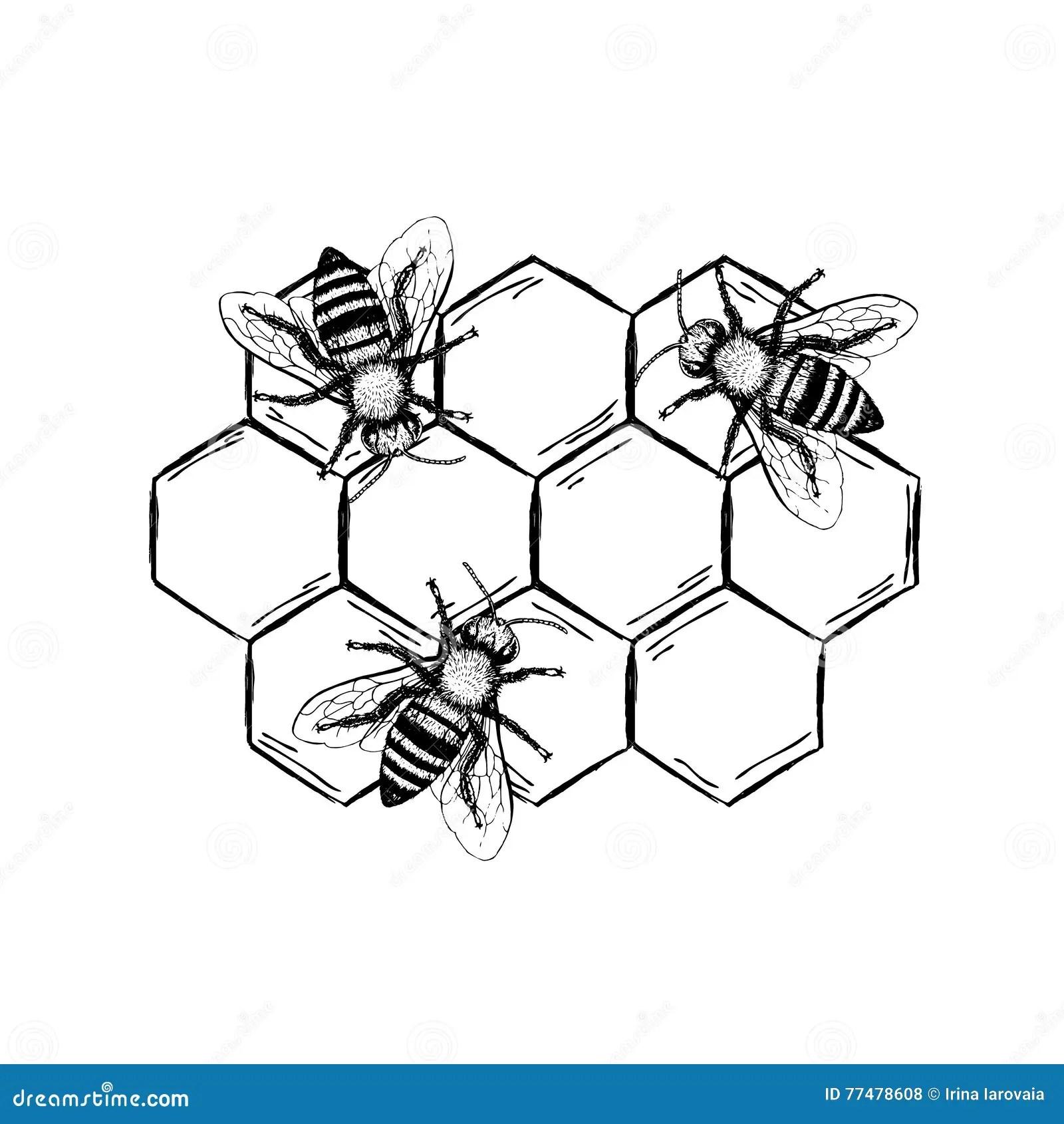Black Wasp Sting