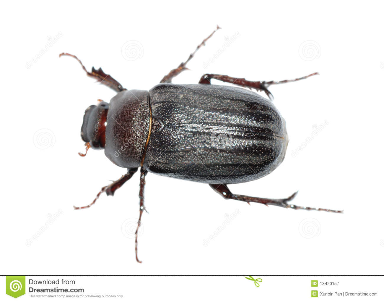 Beetle Bug Stock Image Image Of Background Isolated