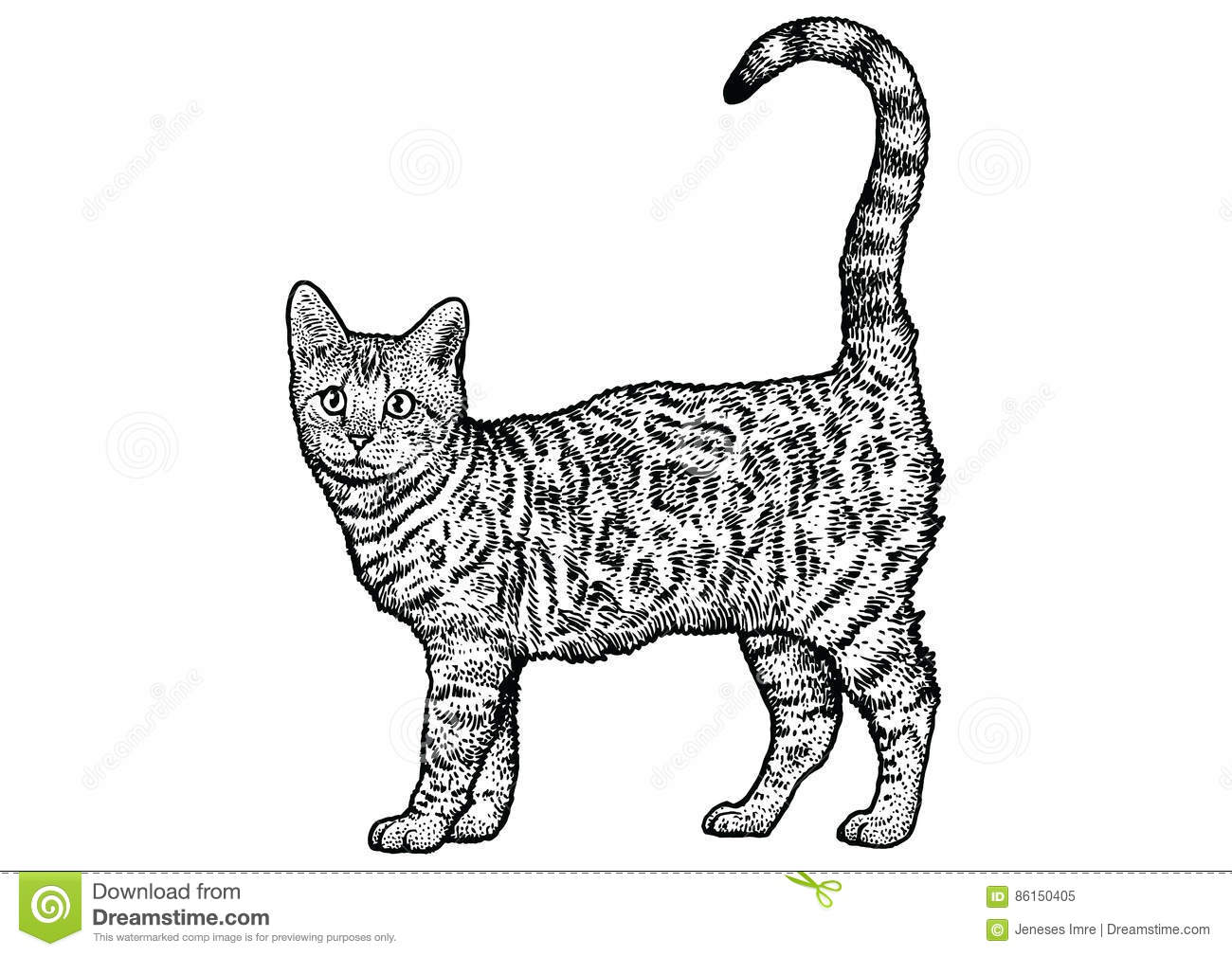 Bengal Cat Illustration Drawing Engraving Line Art
