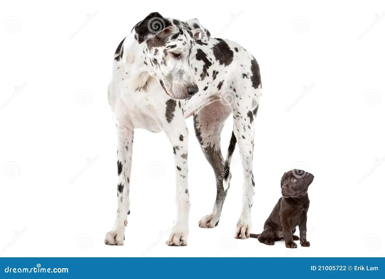 Big Dog Small Dog Stock Photo Image Of Animal Huge