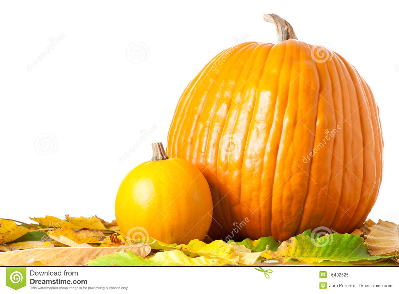 Big And Small Pumpkin Stock Image Image Of Organic