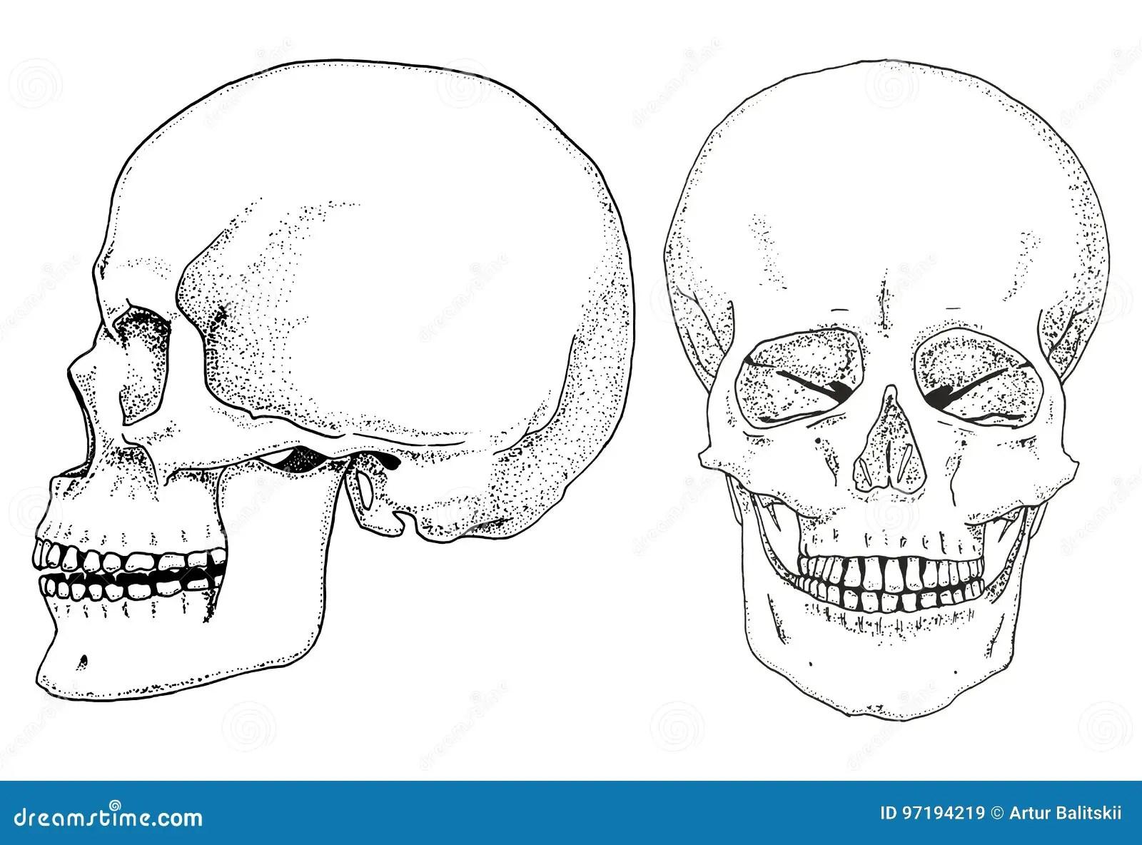 Biologia Humana Ejemplo De La Anatomia Mano Grabada
