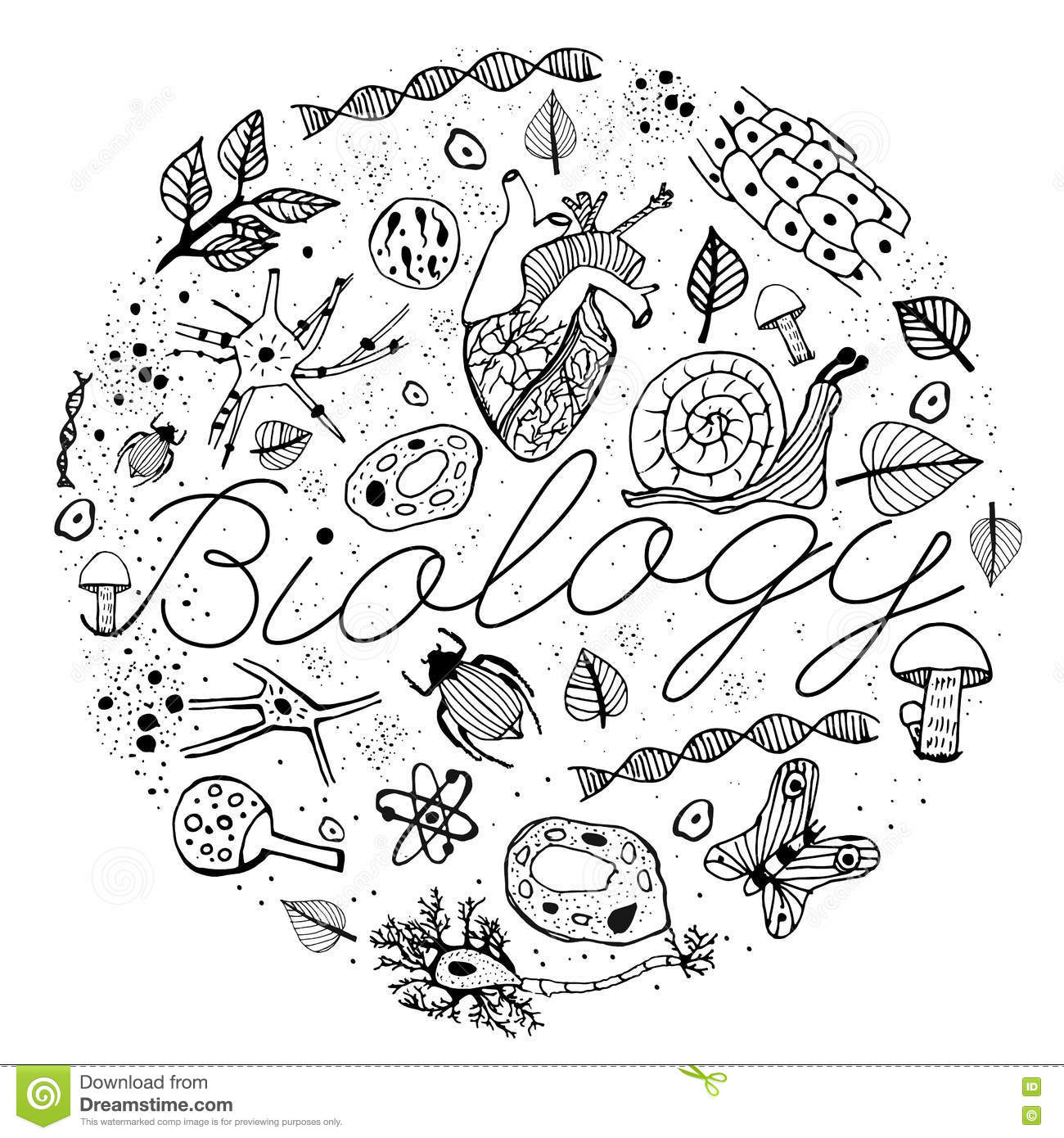 Biology Vector Doodles Stock Vector Illustration Of