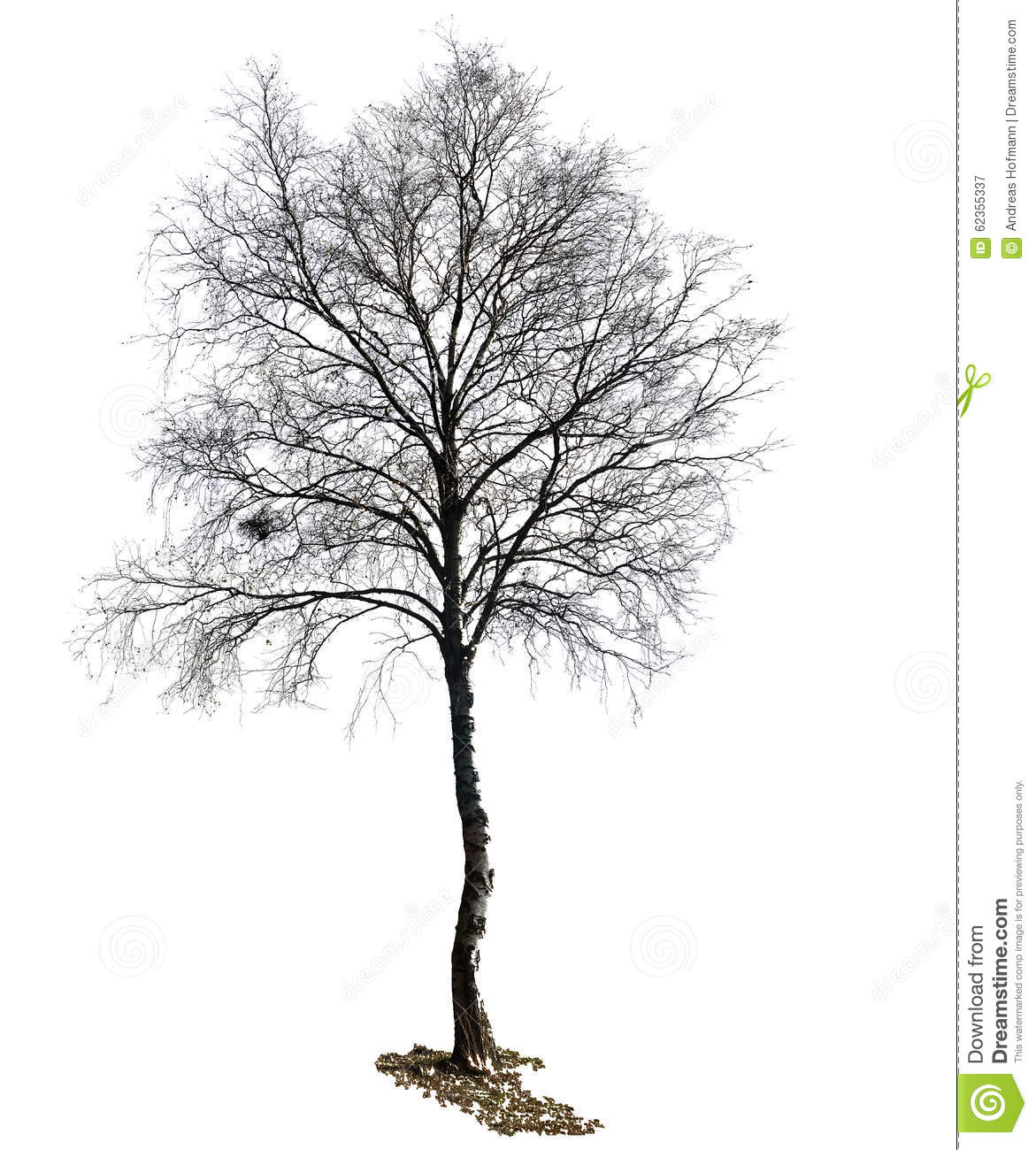 Birch Tree Silhouette Isolated Stock Illustration