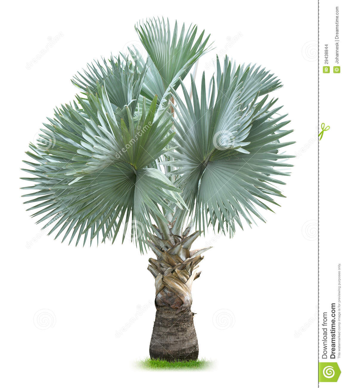 Architecture Palm Tree Top View