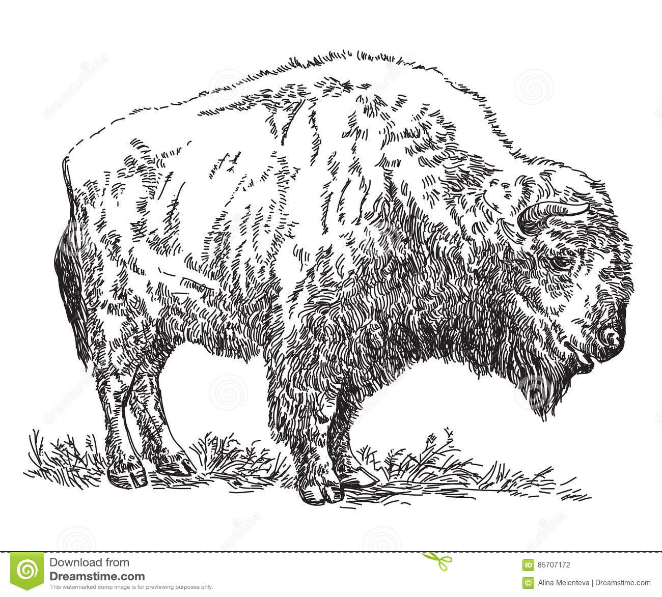 Bison Vector Cartoon Vector