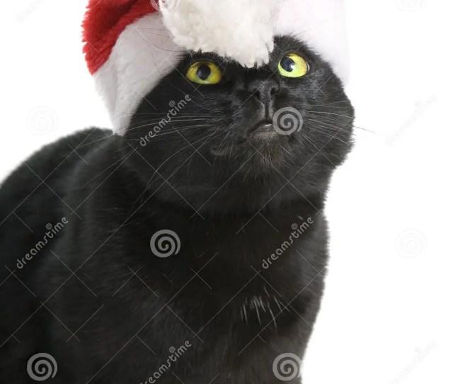 Black Cat Santa Cute Christmas Cat On White Background