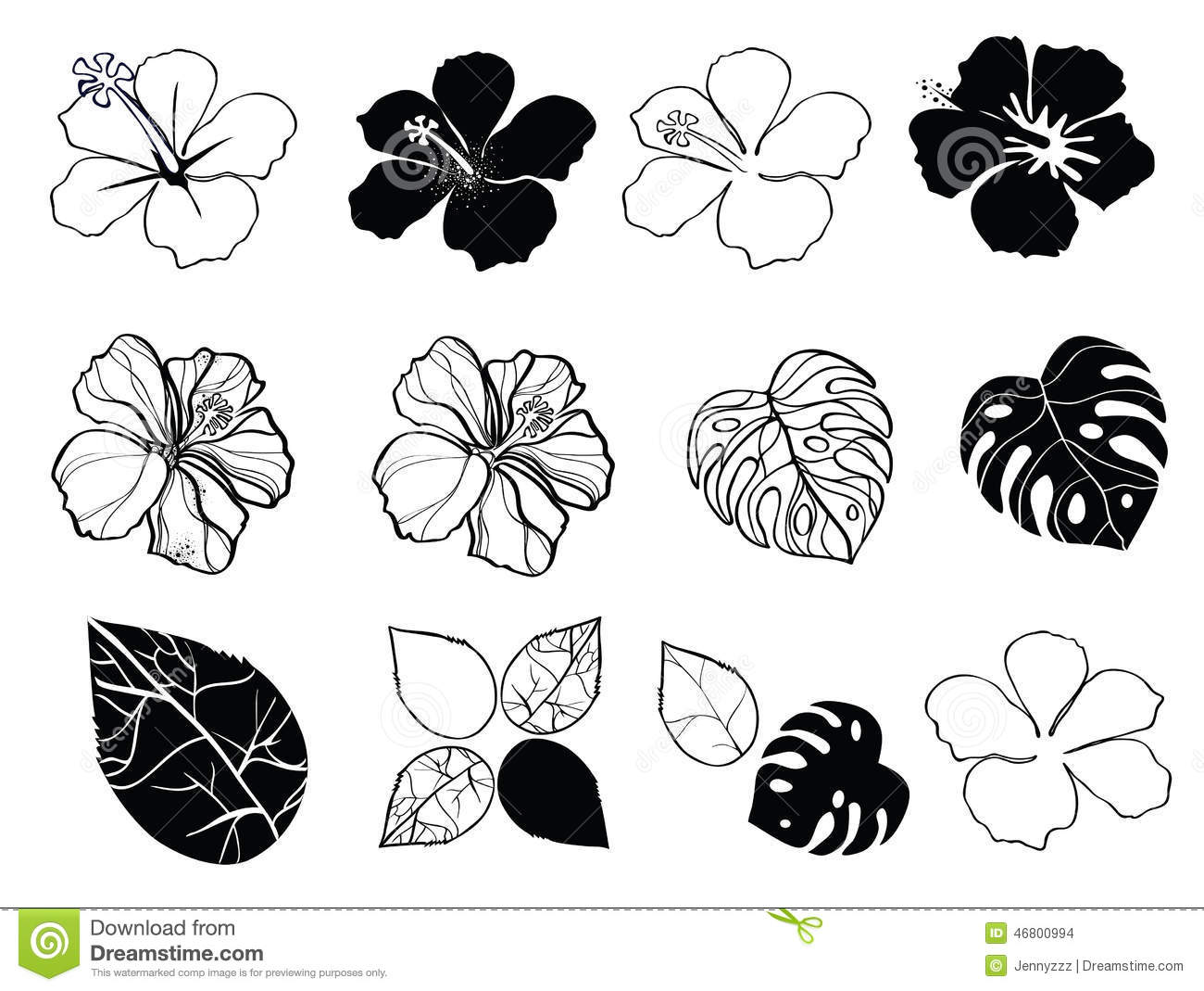 Black And White Flowers Of Hibiscus Stock Vector