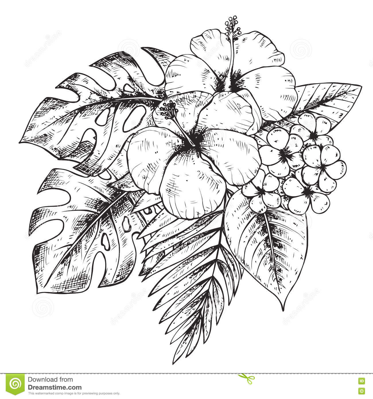Black And White Hand Drawn Graphic Tropical Plants Stock