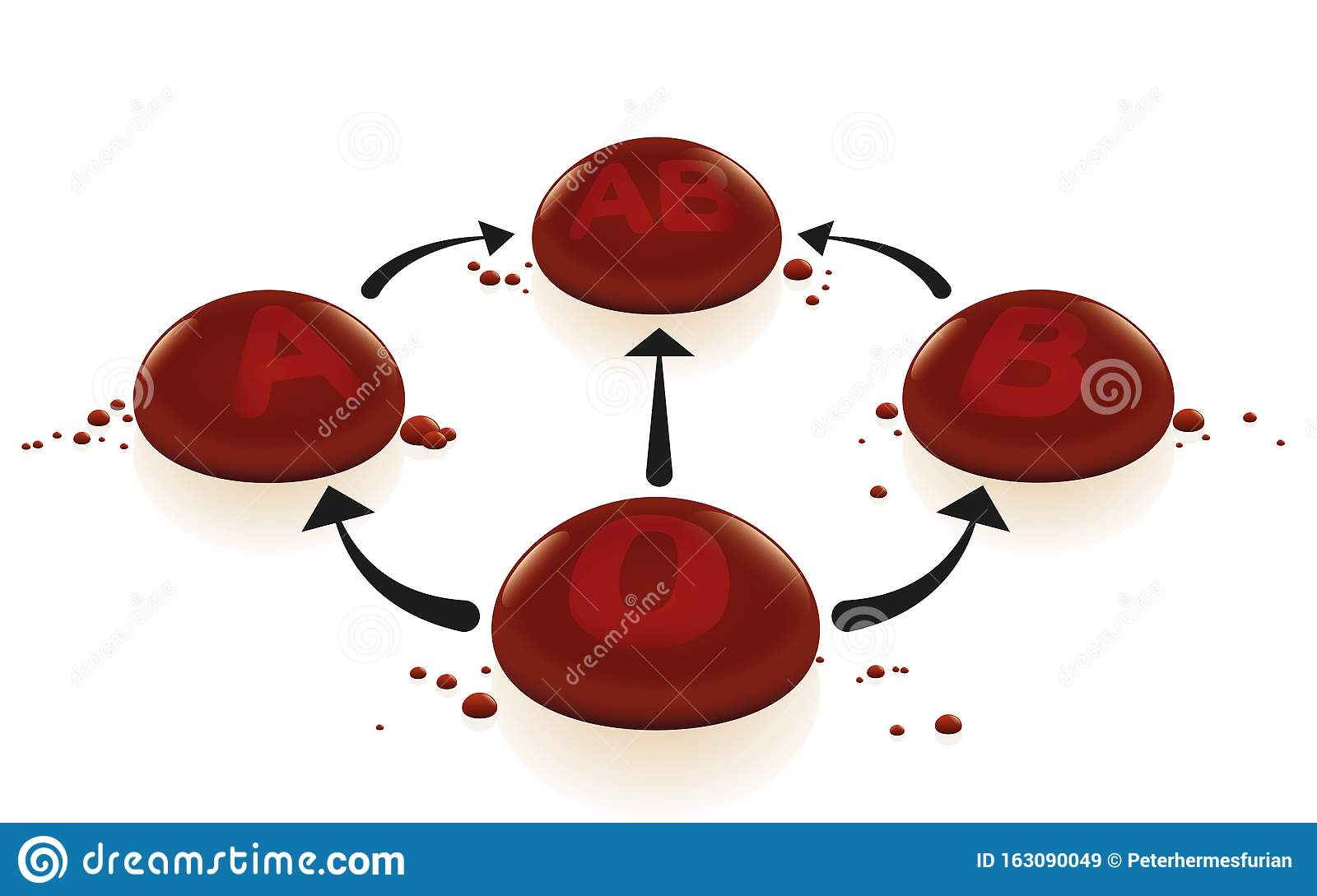 Blood Groups Transfusion Universal Donor Recipient Stock