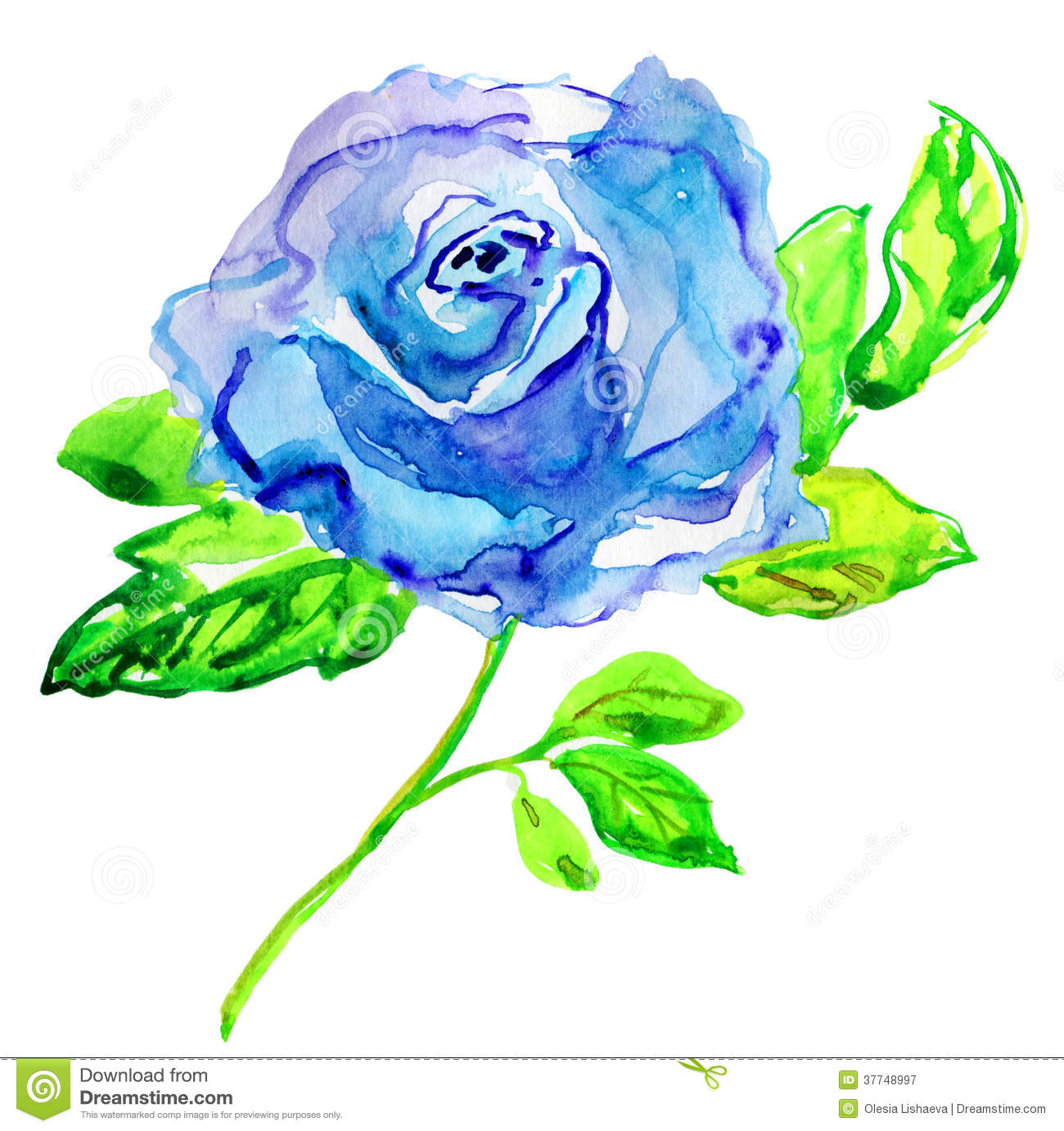 Blue Rose Watercolor Painting Royalty Free Stock