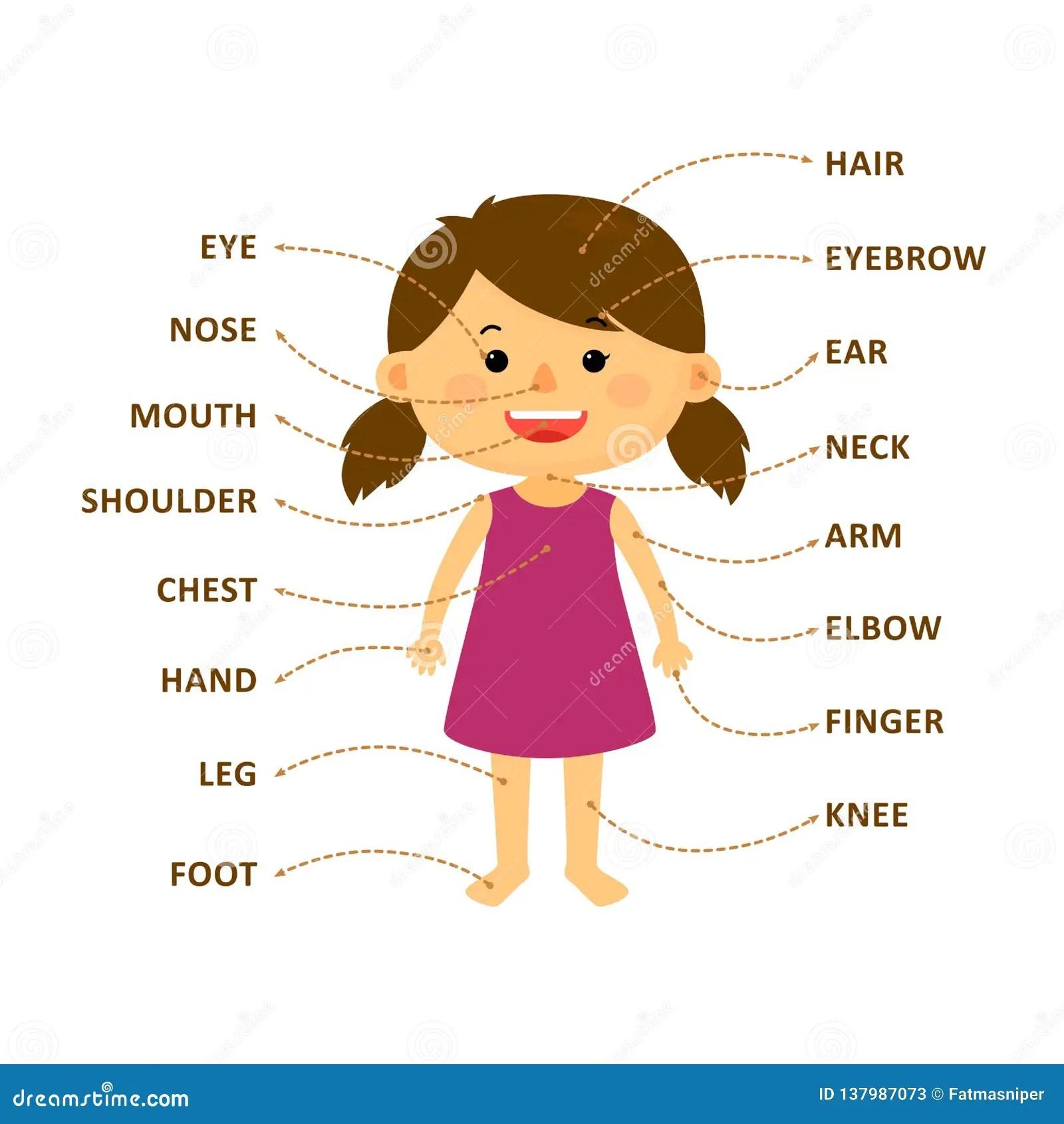 Body Part Girl Stock Illustration Illustration Of