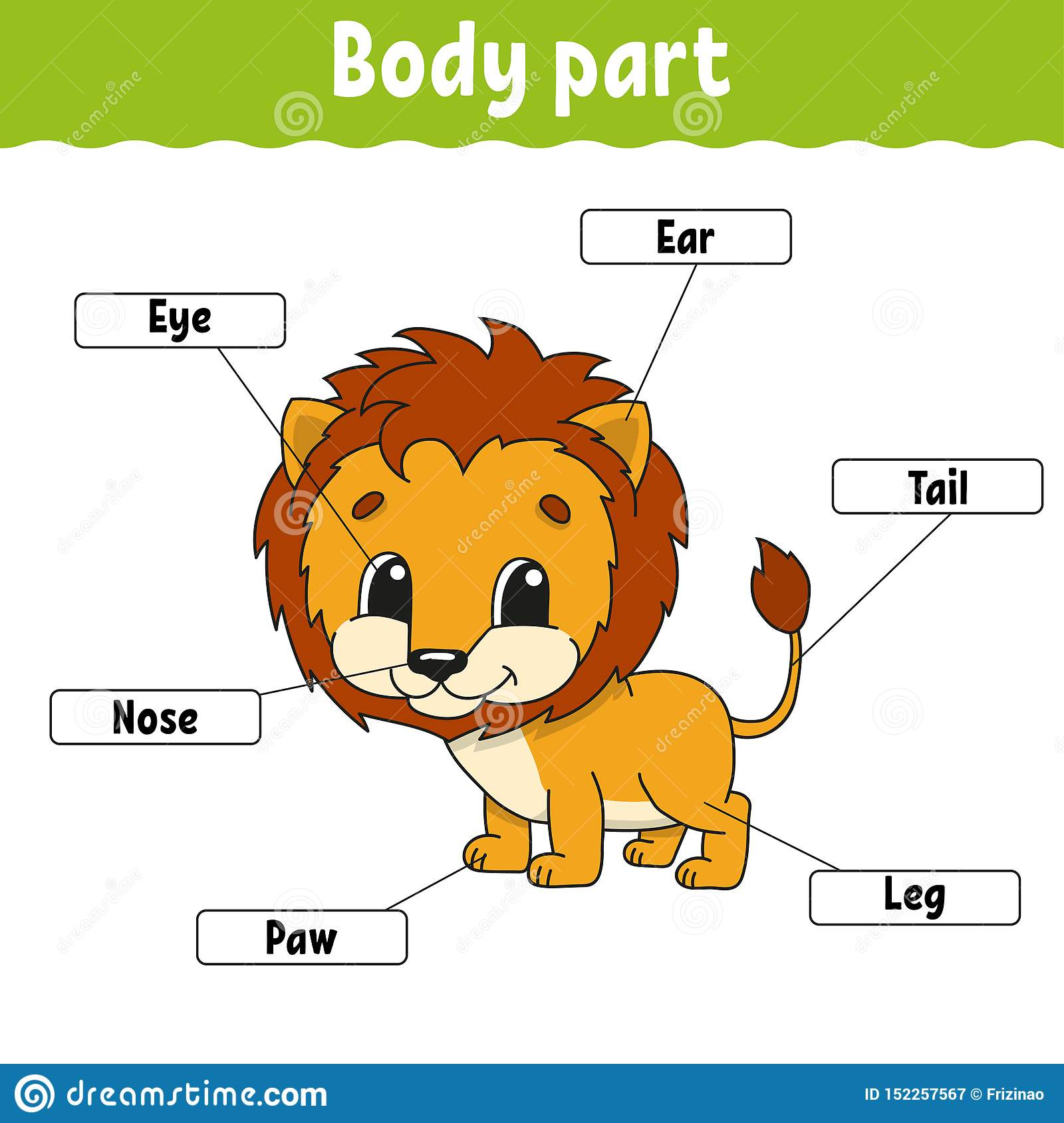 Body Part Learning Words Education Developing Worksheet