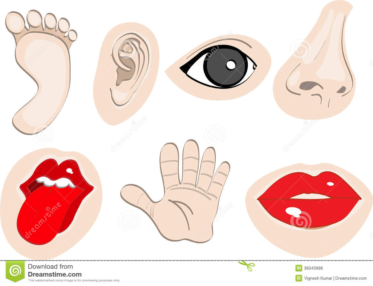 Body Parts Set 2 Royalty Free Stock Photos