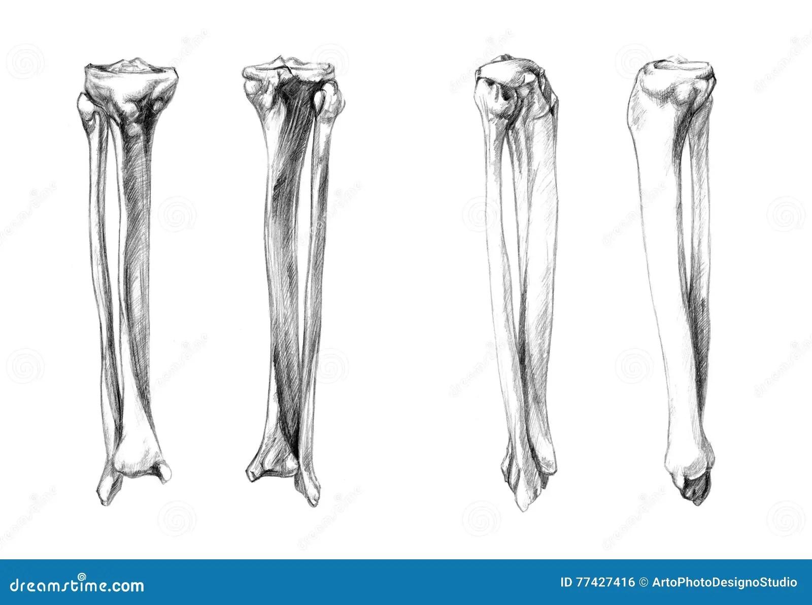 diagrams of fibular fracture