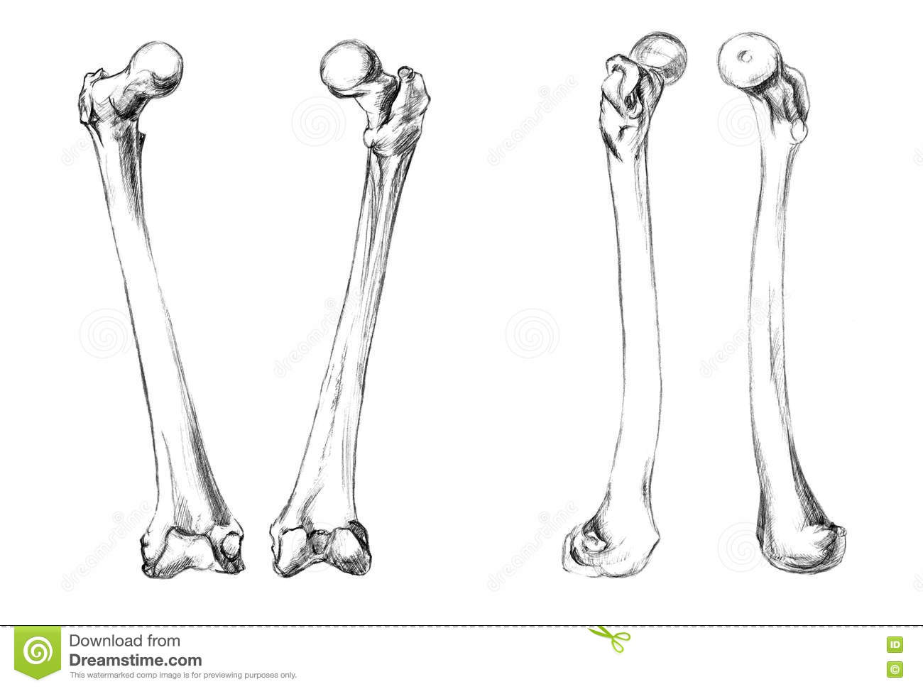 Ulna Bone Top