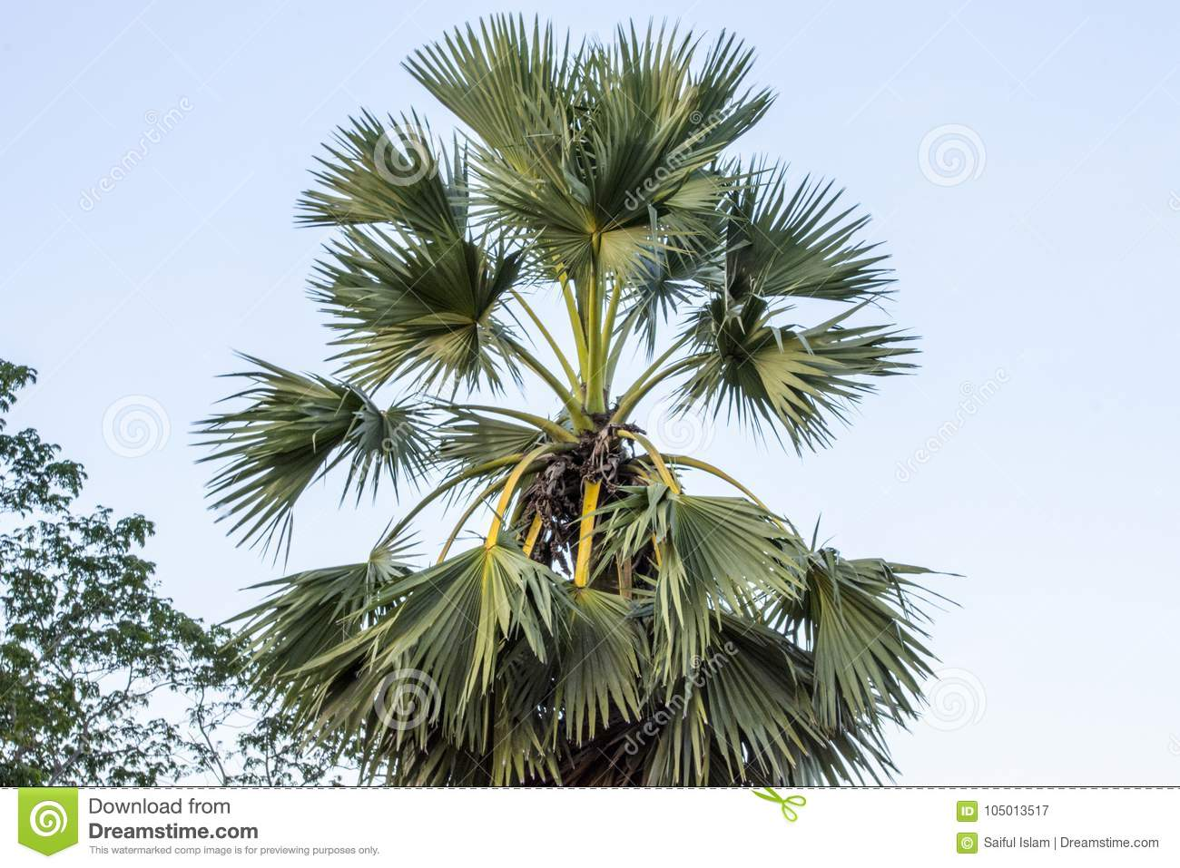 Top Parts Of A Palm Tree Labeled